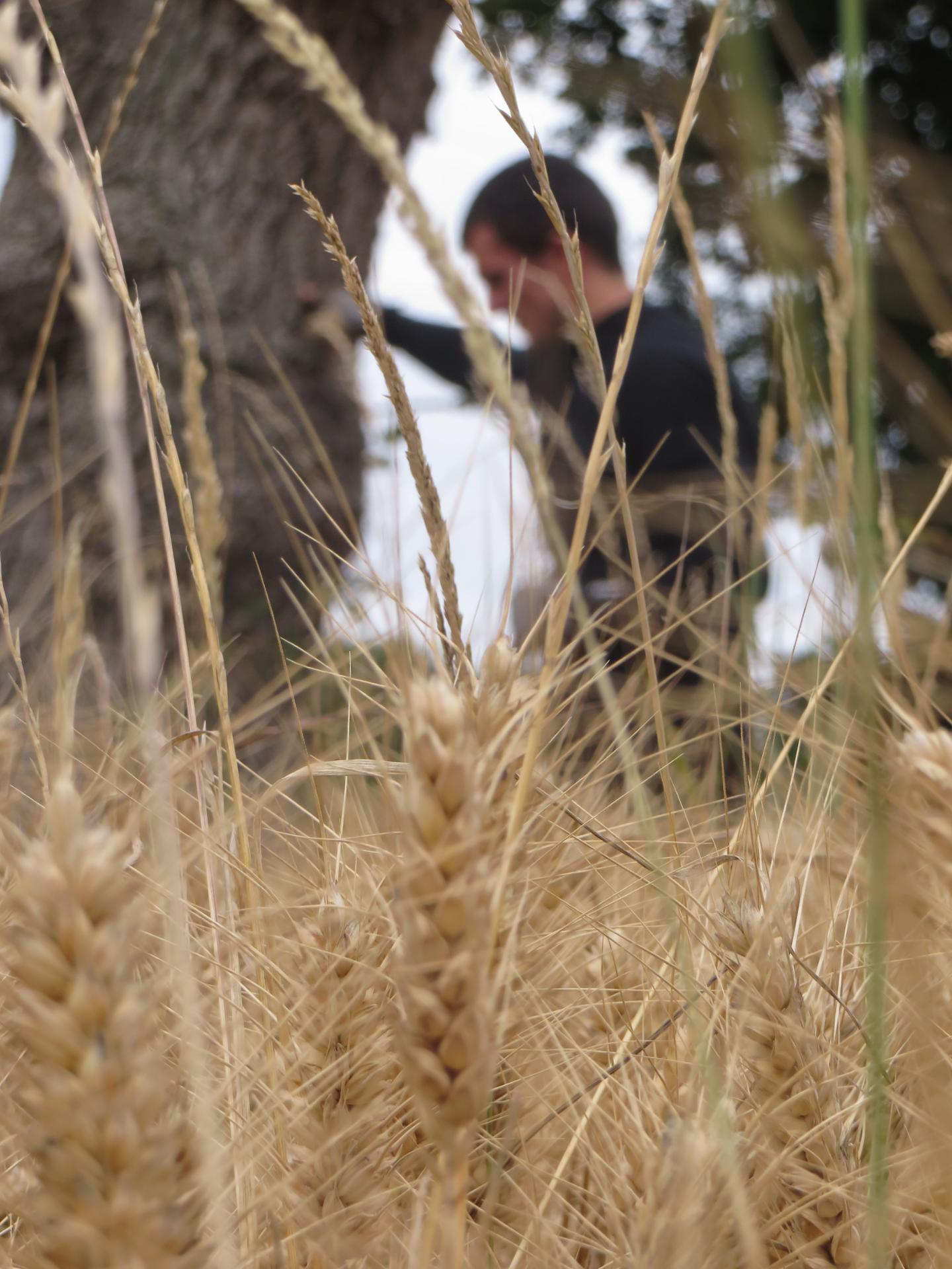 Dans les blés avec Jeuf.