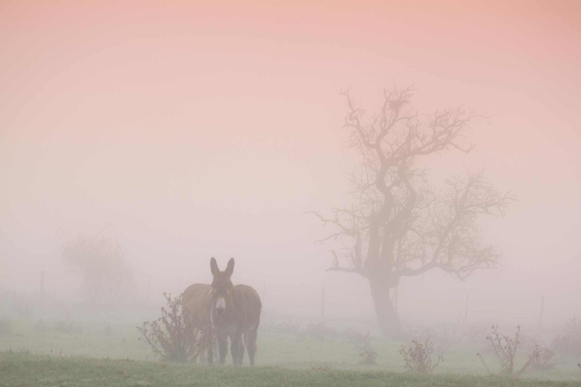 Un âne peut en cacher un autre