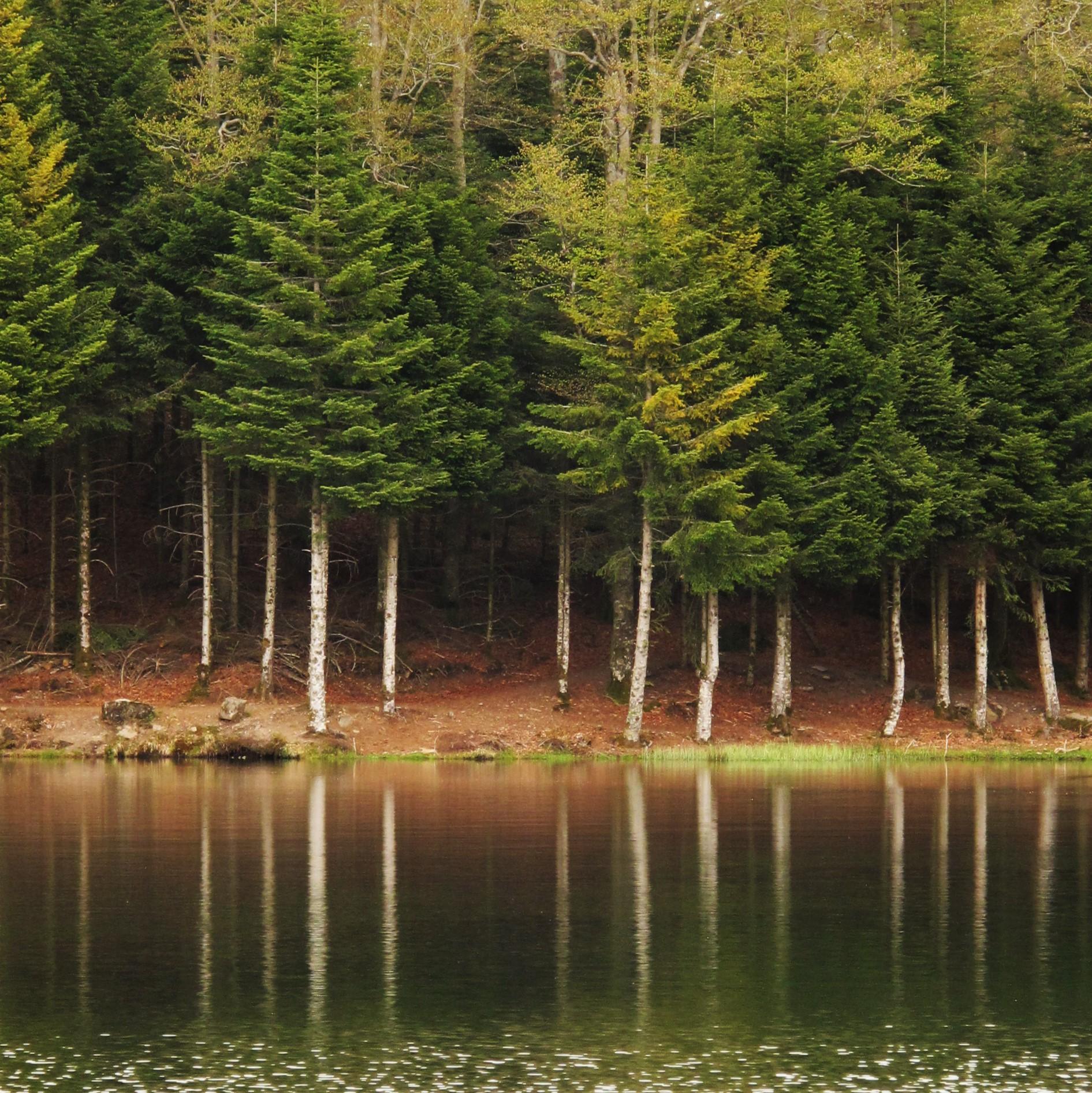 Reflet de forêt