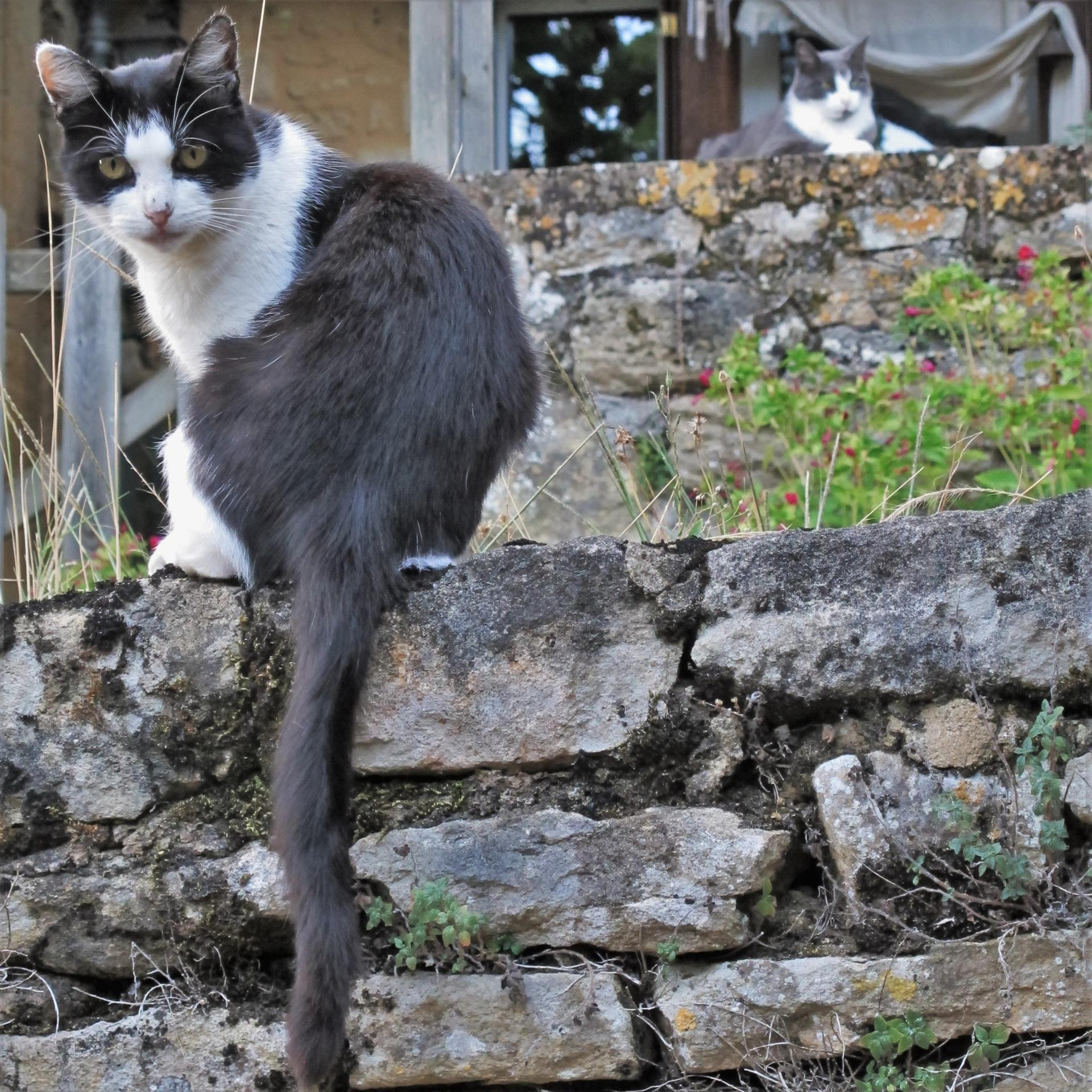 A chat, chat et demie