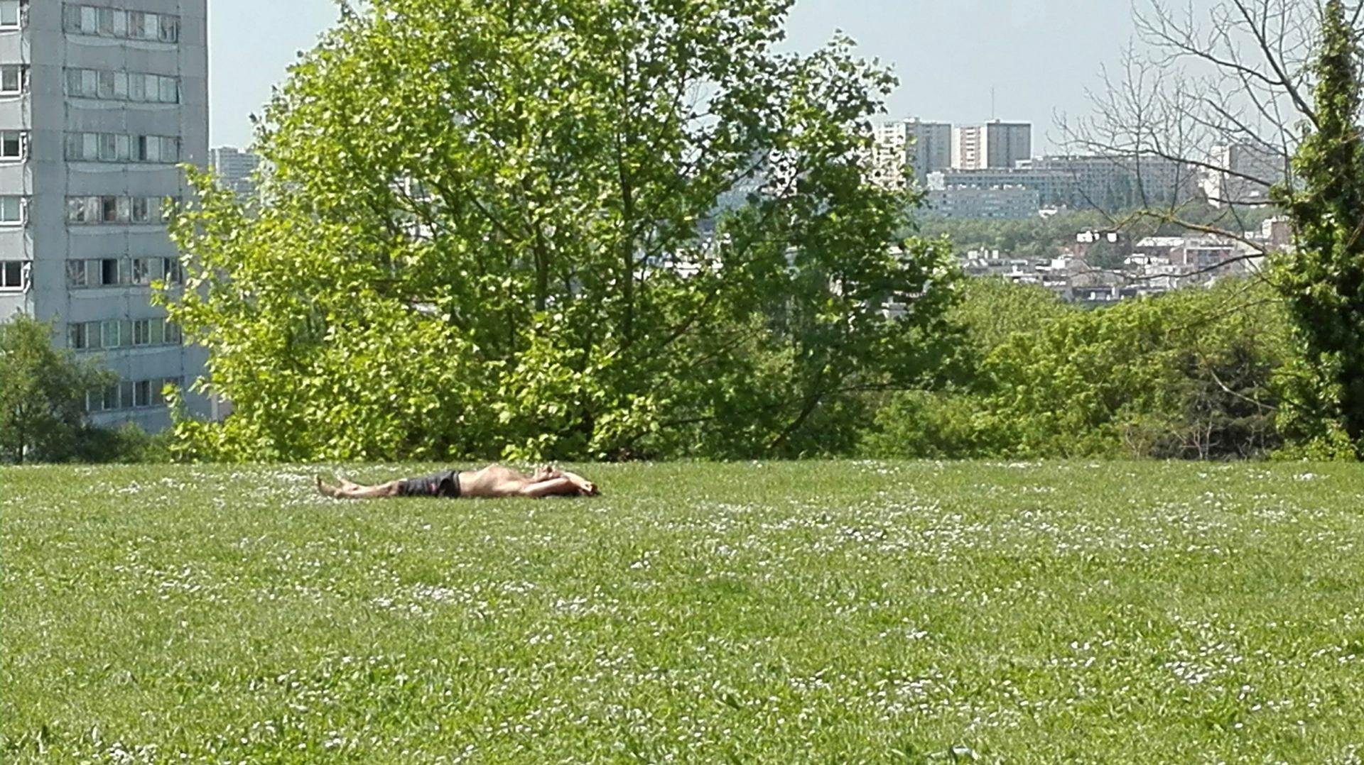 Eté dans le parc de Montreuil
