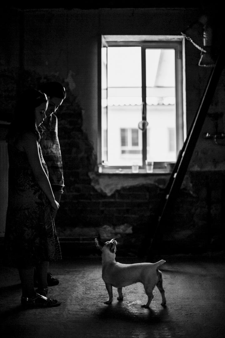 Dog's light