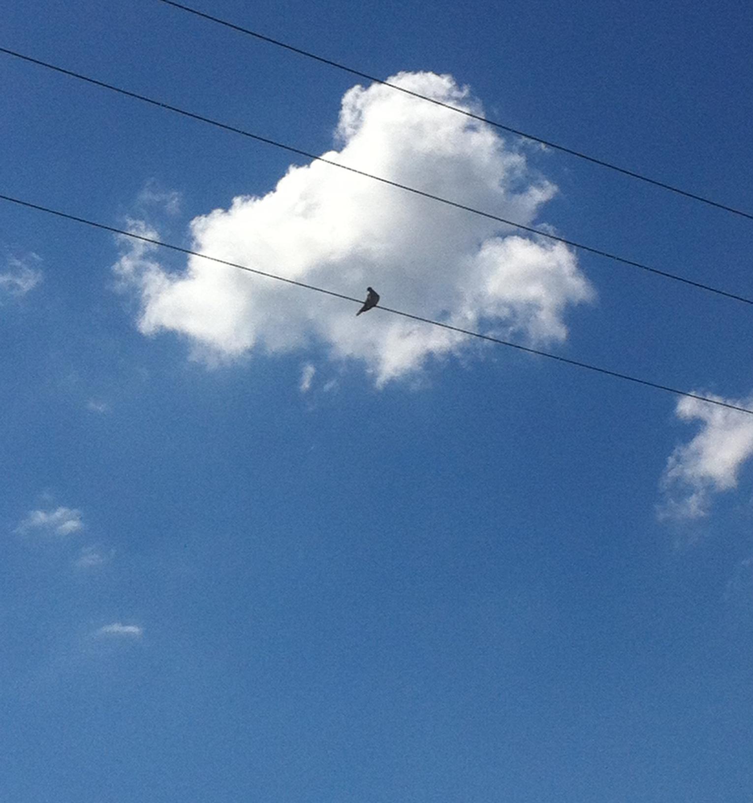 sky, cloud and bird