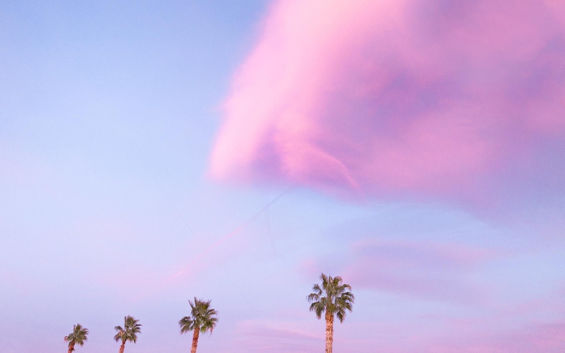 Palmiers sur la baie.