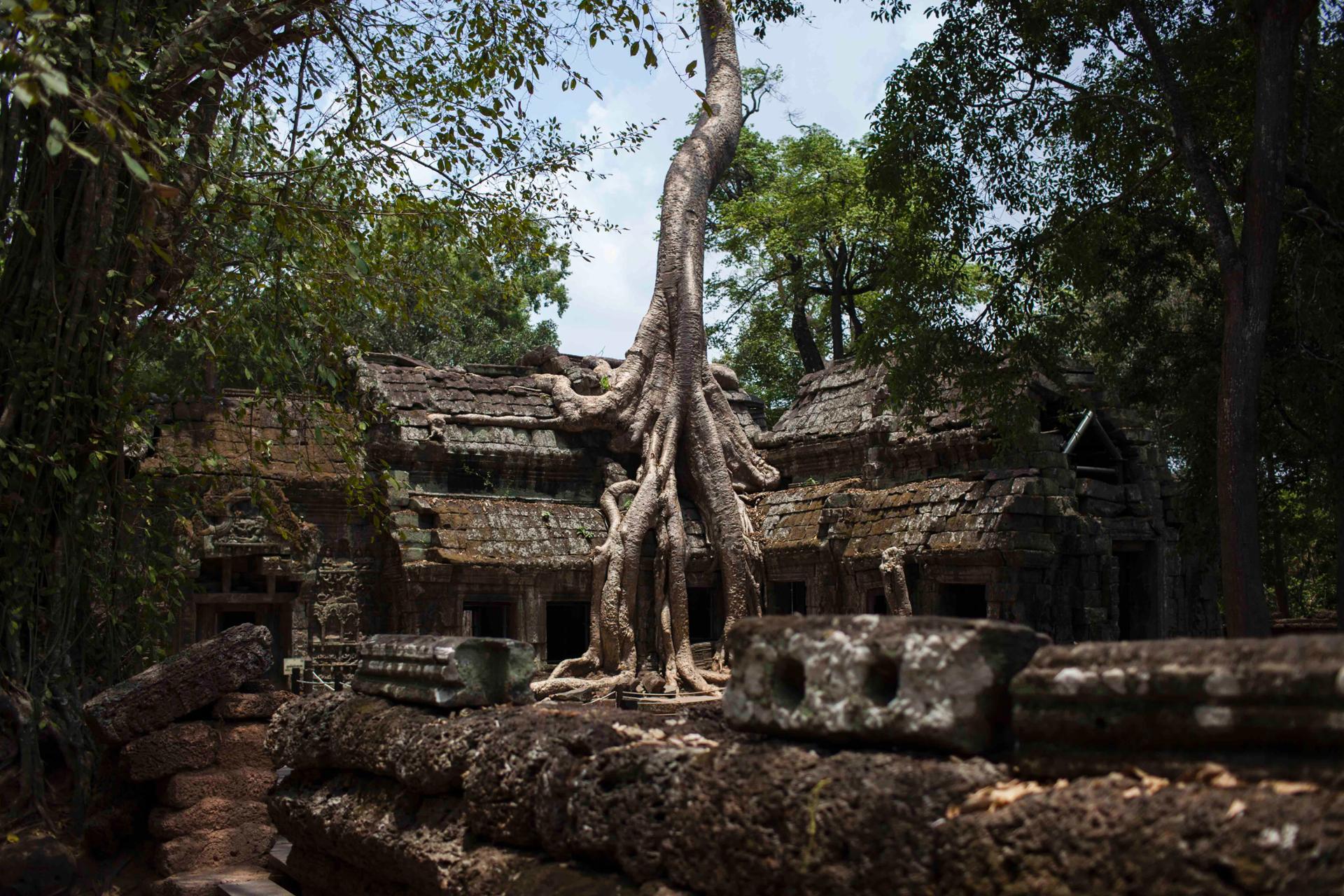 La Nature reprend ses droits, Ta Phrom, Angkor, Cambodge.