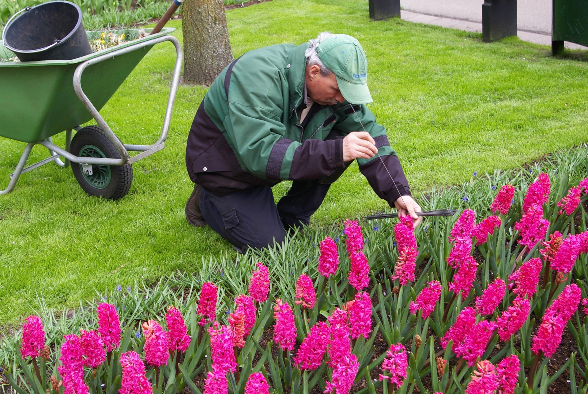 IMGP2001.JPG - Le jardinier