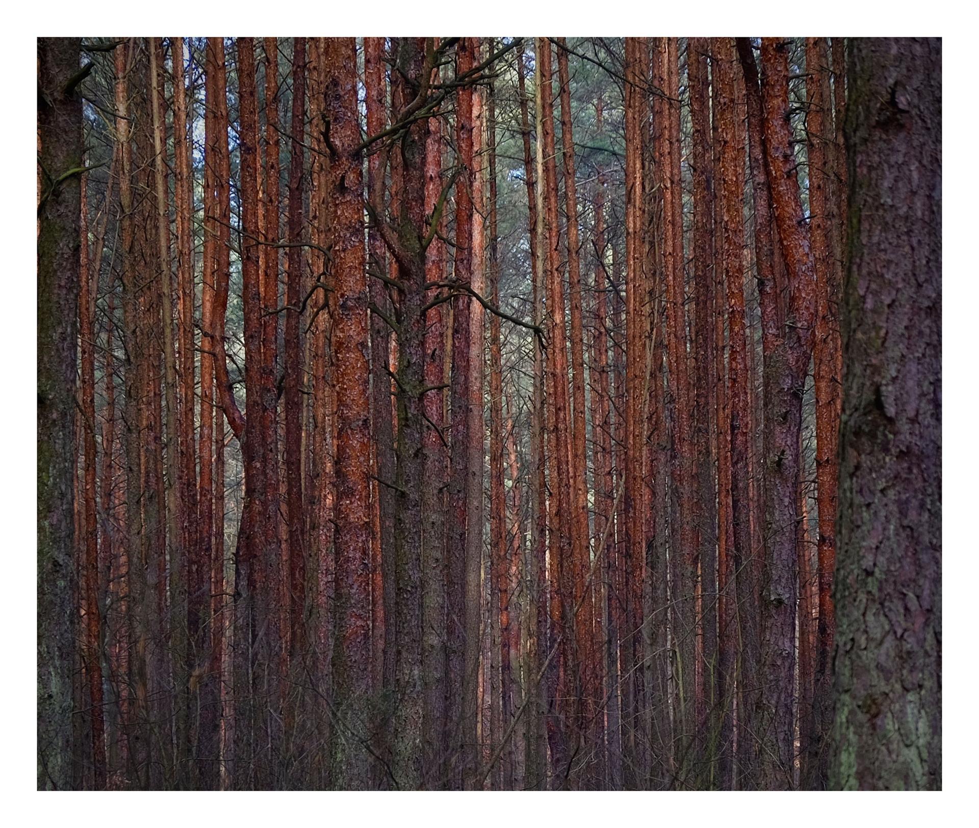 Forêt à l'infini