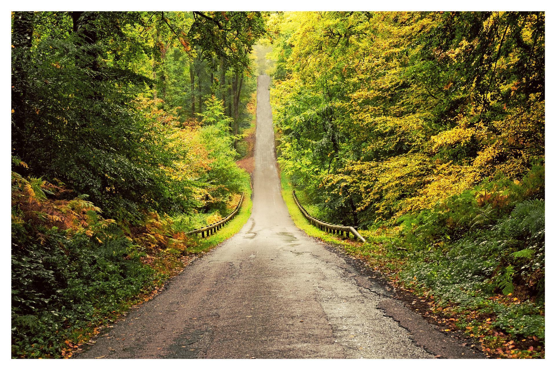 Les routes de forêt