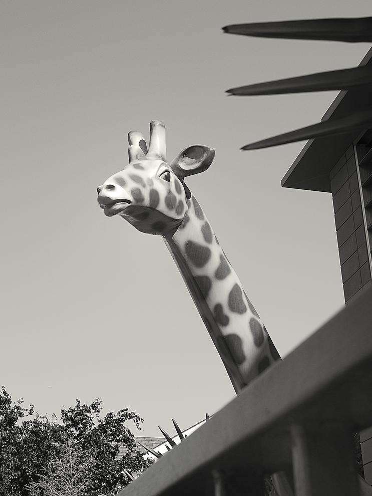 False Zoo