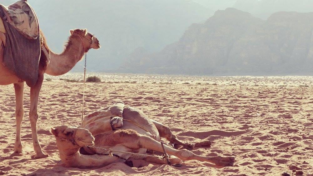 Wadi Rum. - Jordanie