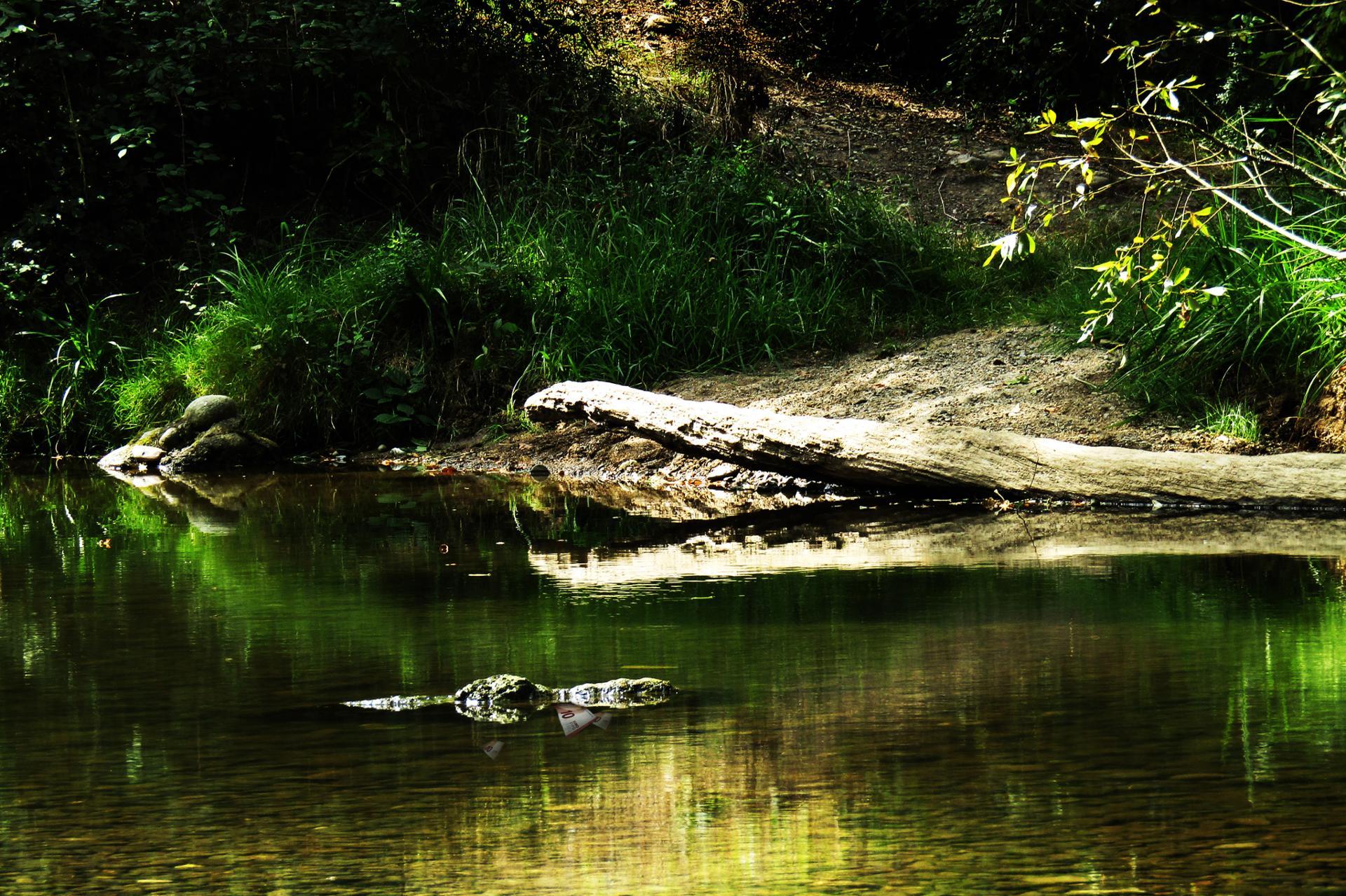 Le repas des crocodiles.