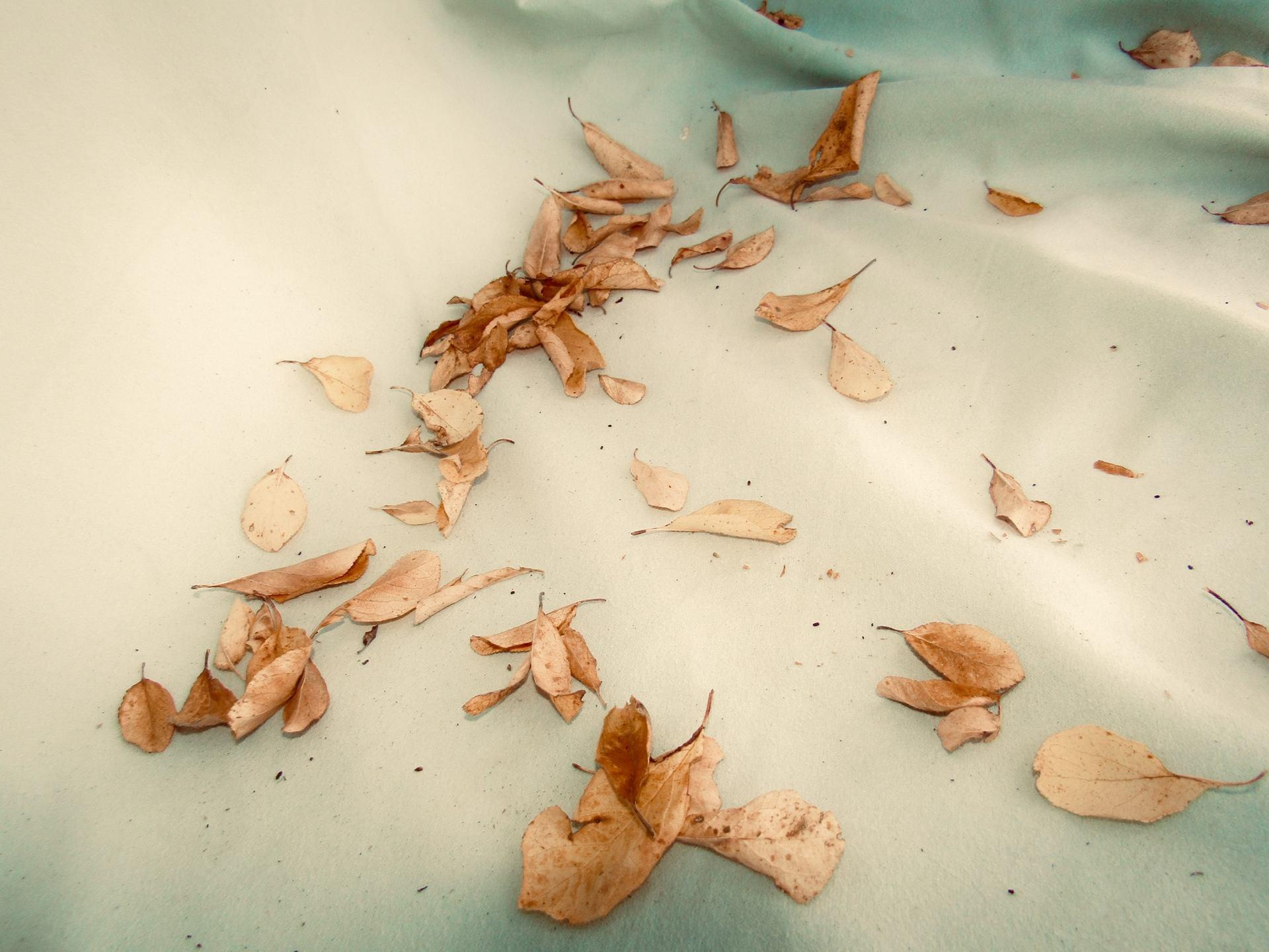 Sur le chemin de l'automne.