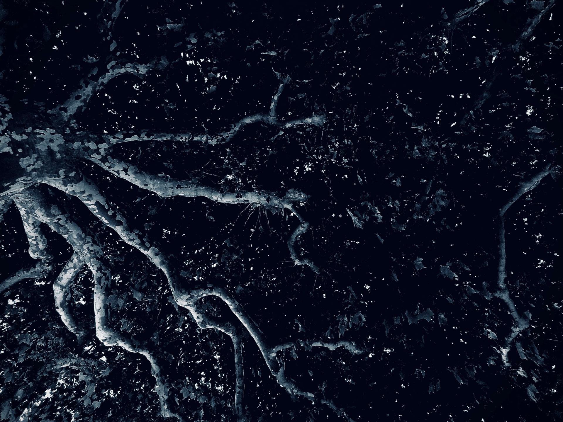 La constellation du poulpe.