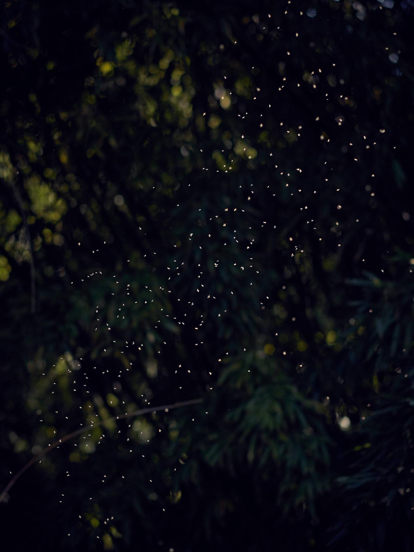 La constellation des moucherons
