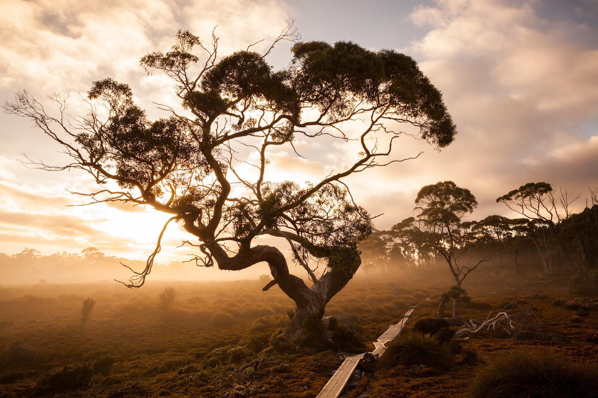 Overland track, Tasmanie