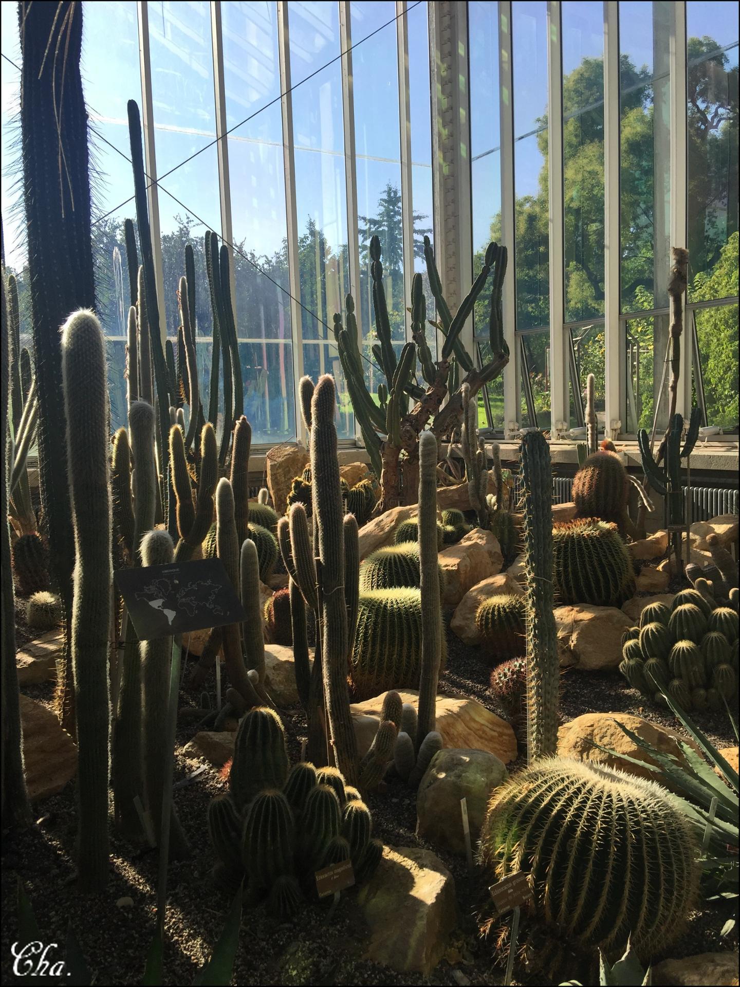 Jardin botanique.