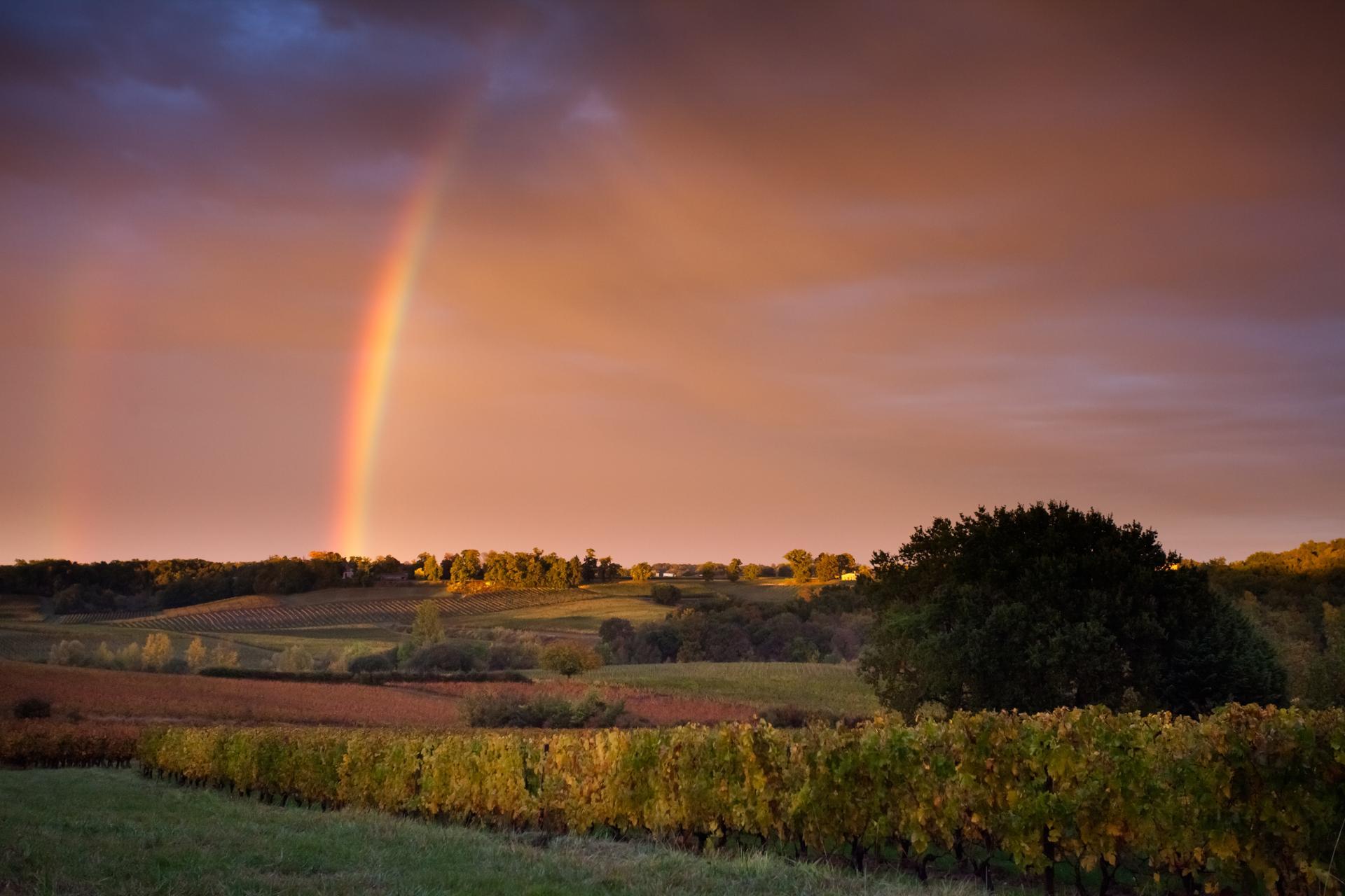 Arc en ciel sur les vignobles.
