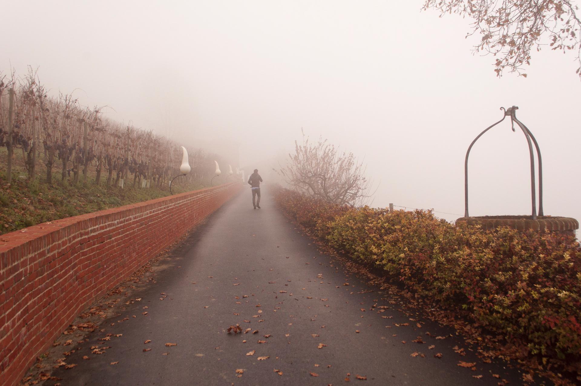 Balade automnale entre les ceps, dans la brume