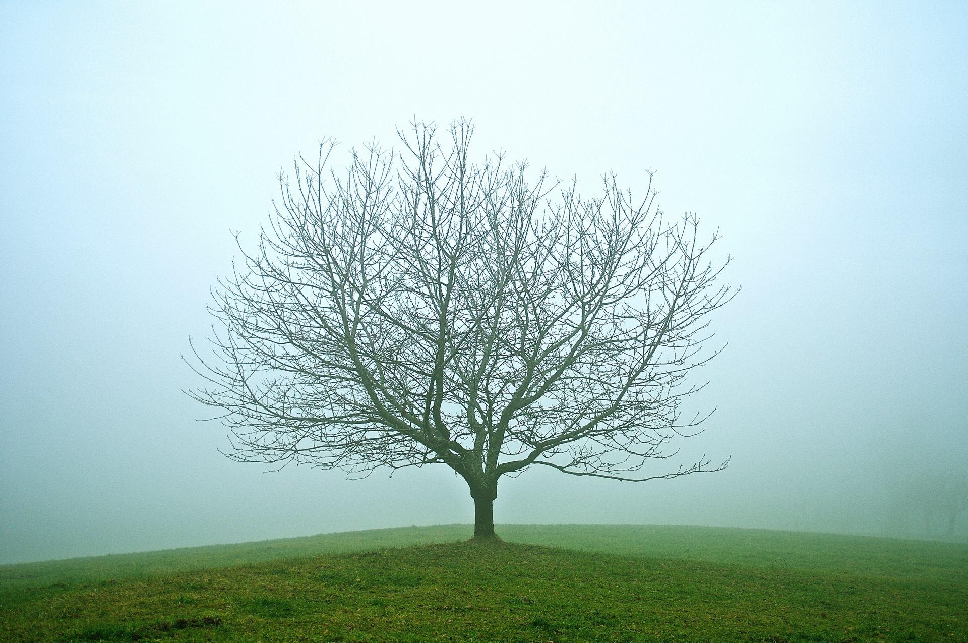 Tenue légère (dans la brume)
