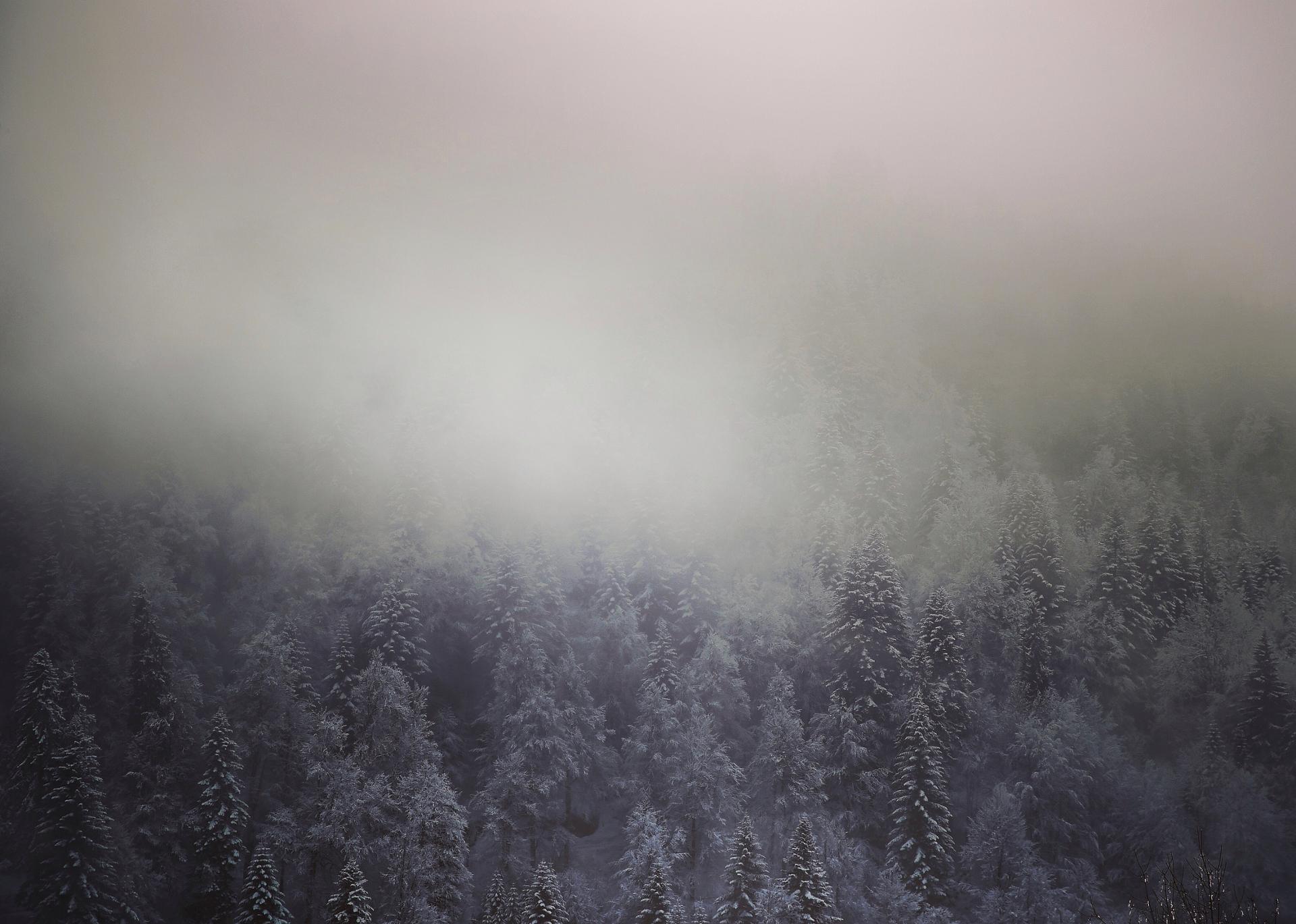 Sapins alpins