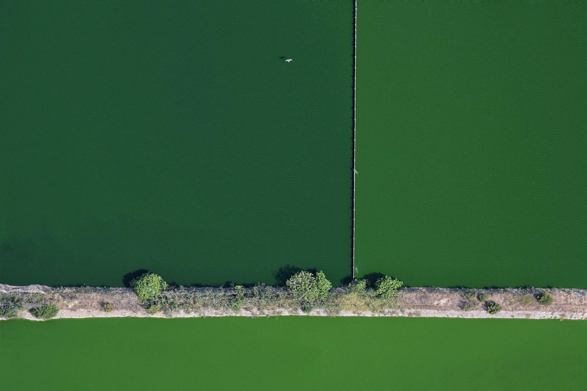 Mouette sur fond vert