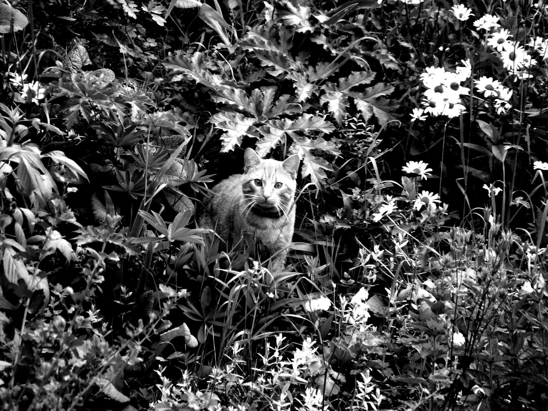 """"""" Les chats apaisent l'âme. Un chat n'a aucun souci, parce qu'il pense de manière intuitive. """" Pal Gerhard Olsen"""