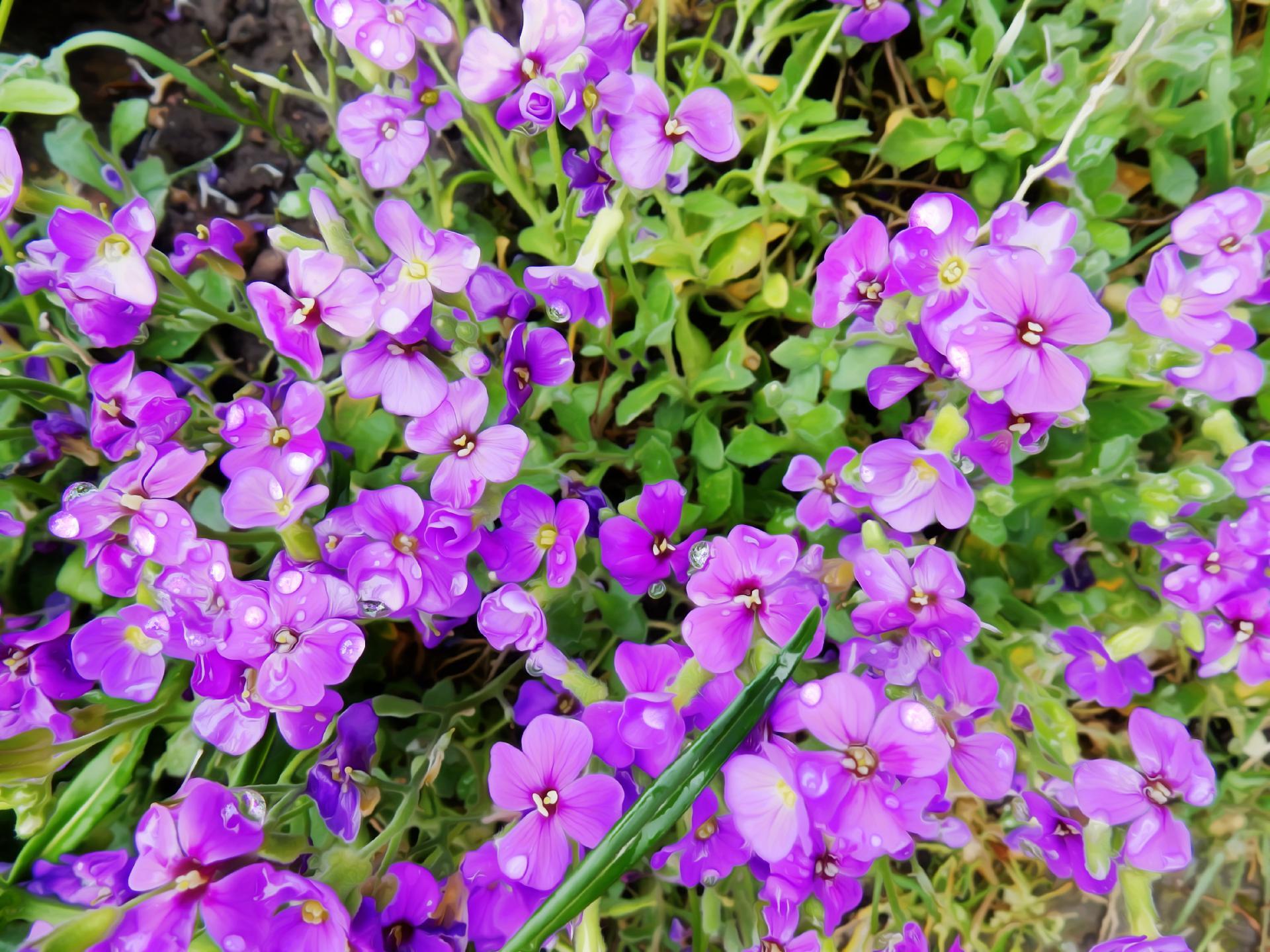 Bouquet ADOUCI  2468