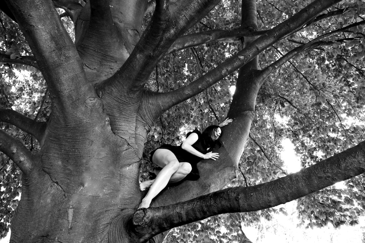 Celle qui endormait les arbres