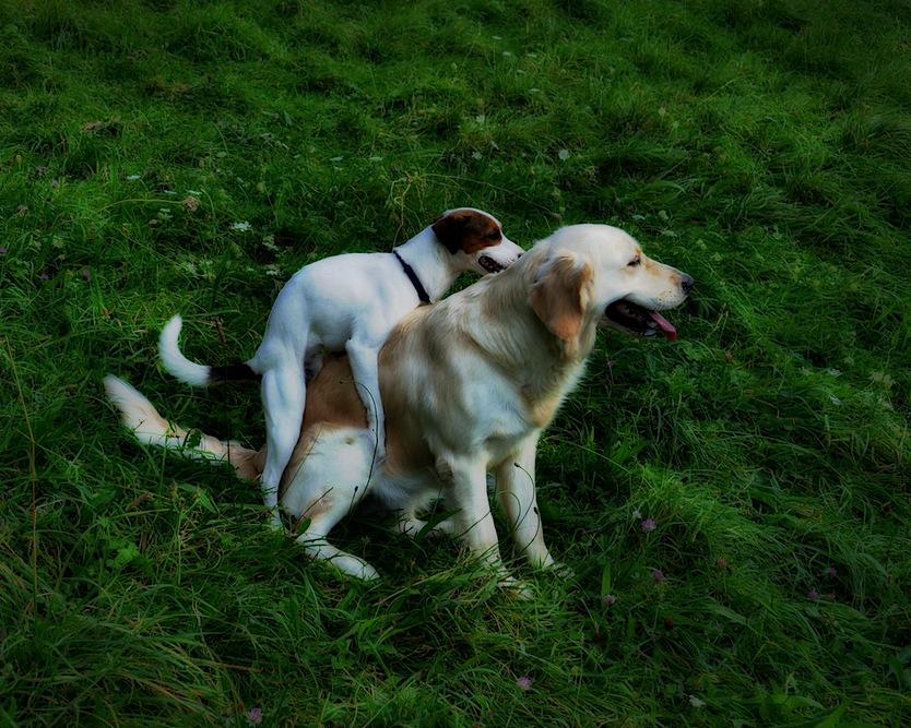 love s dogs
