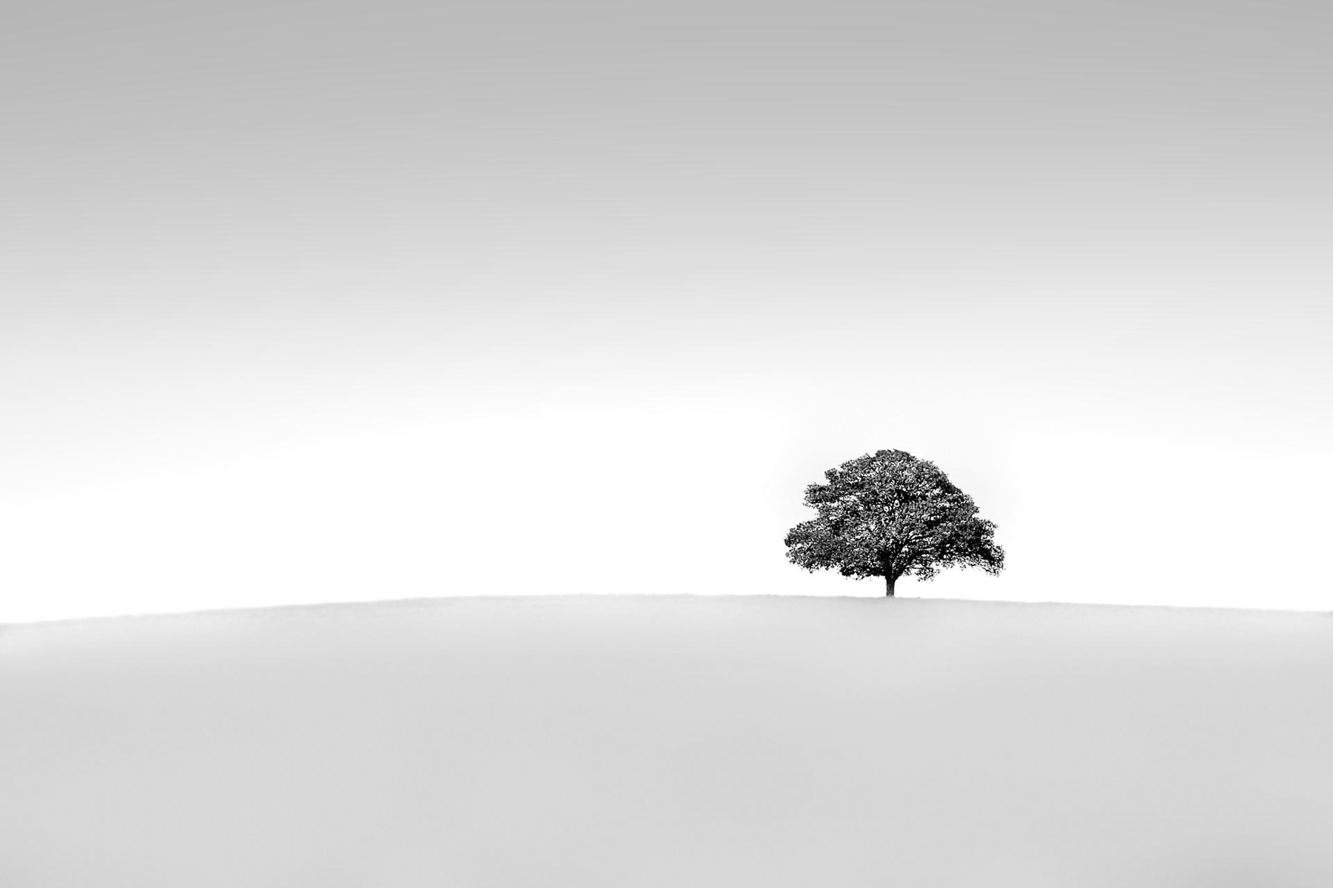 L'arbre minimaliste .
