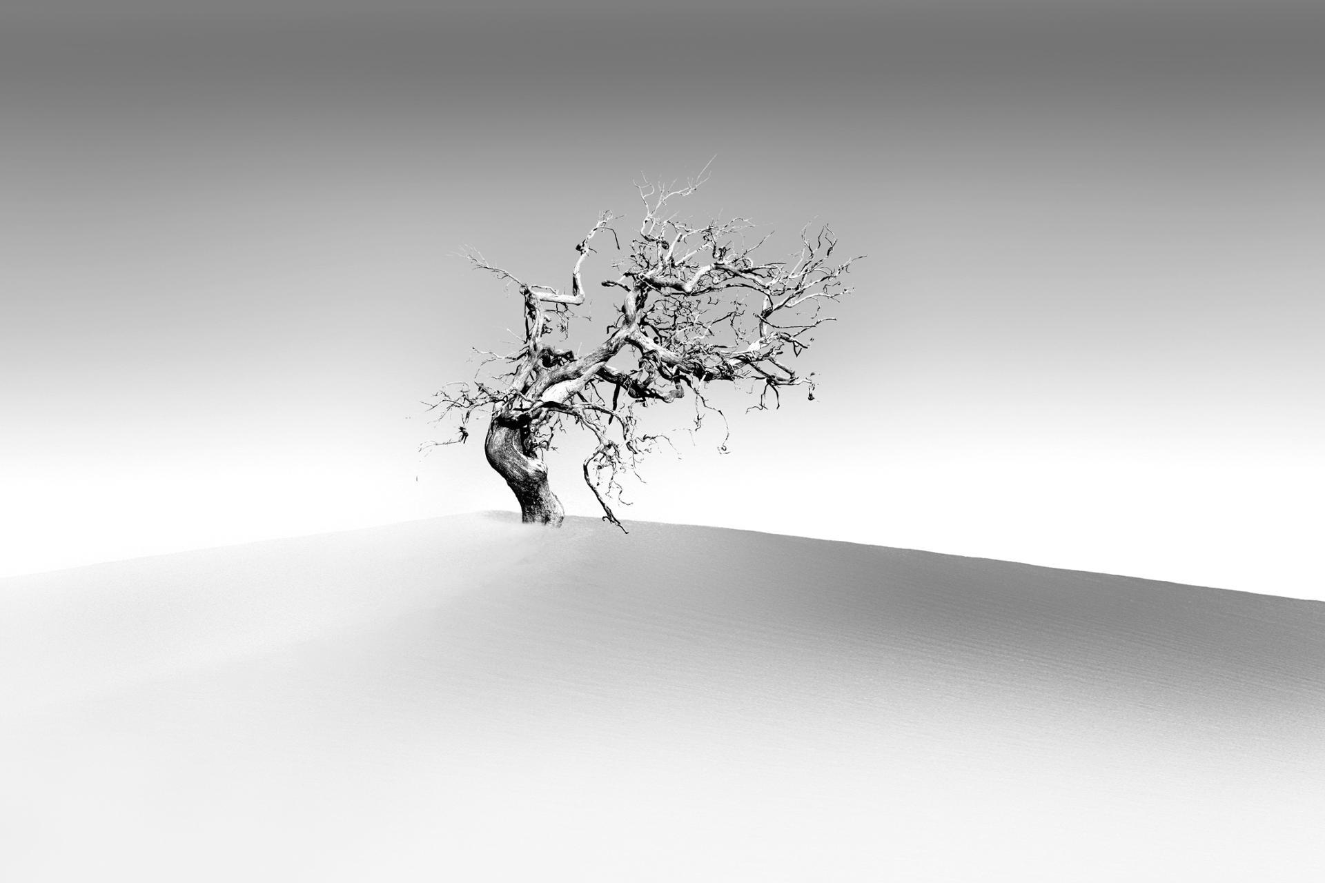 Seul sur la dune