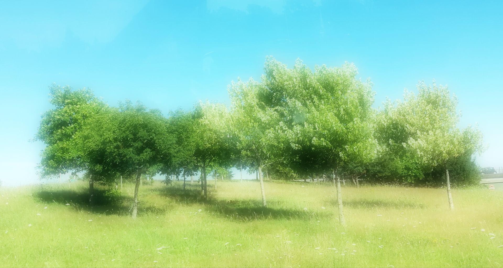 Bande d'arbres