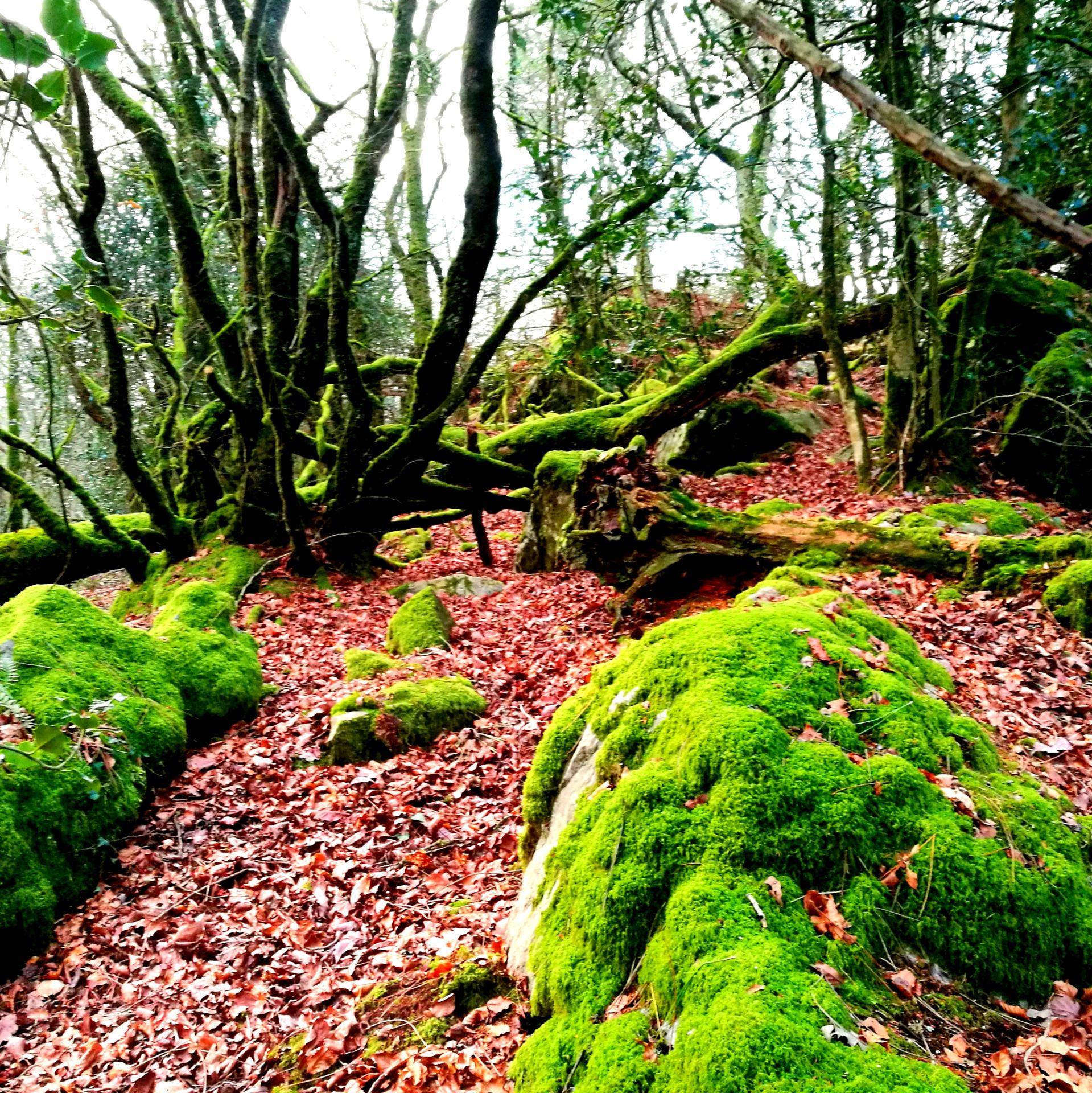 Dans la Forêt