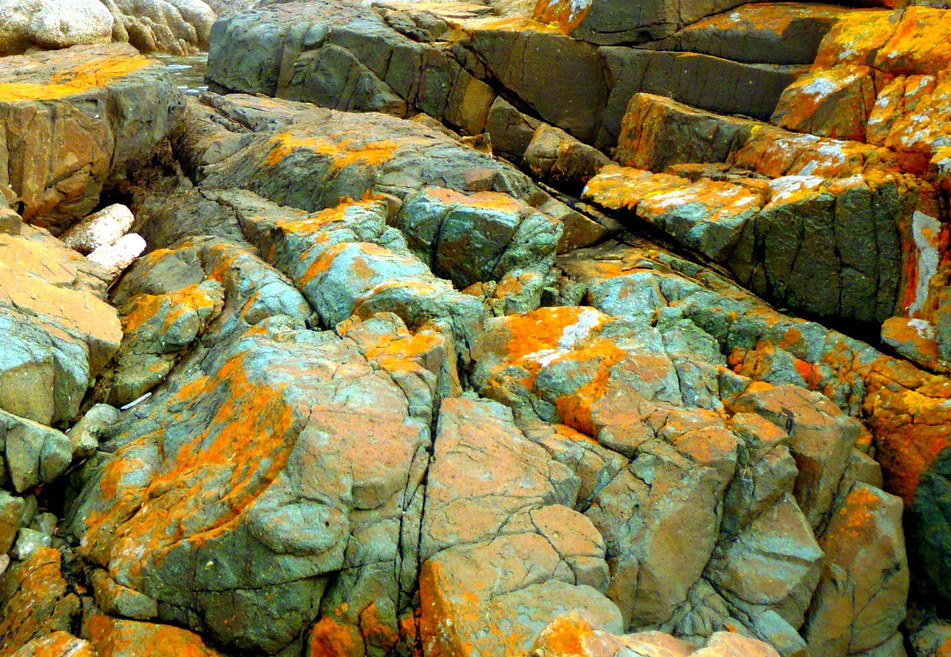 Les Lichens 1