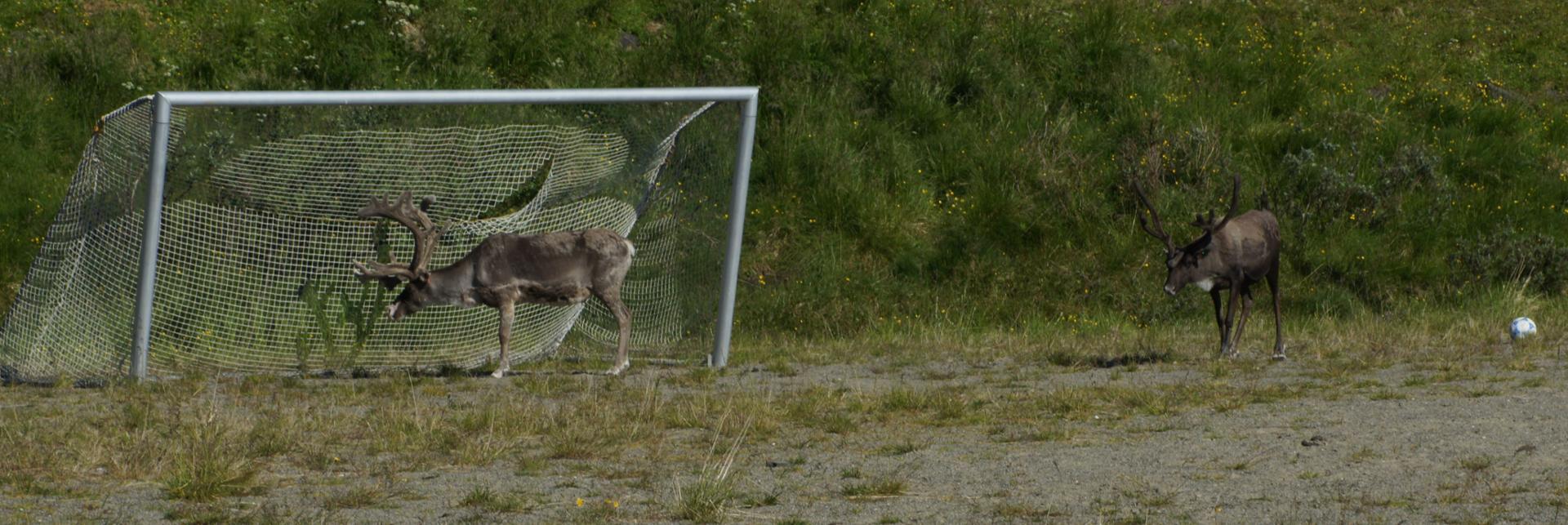 Le match de foot