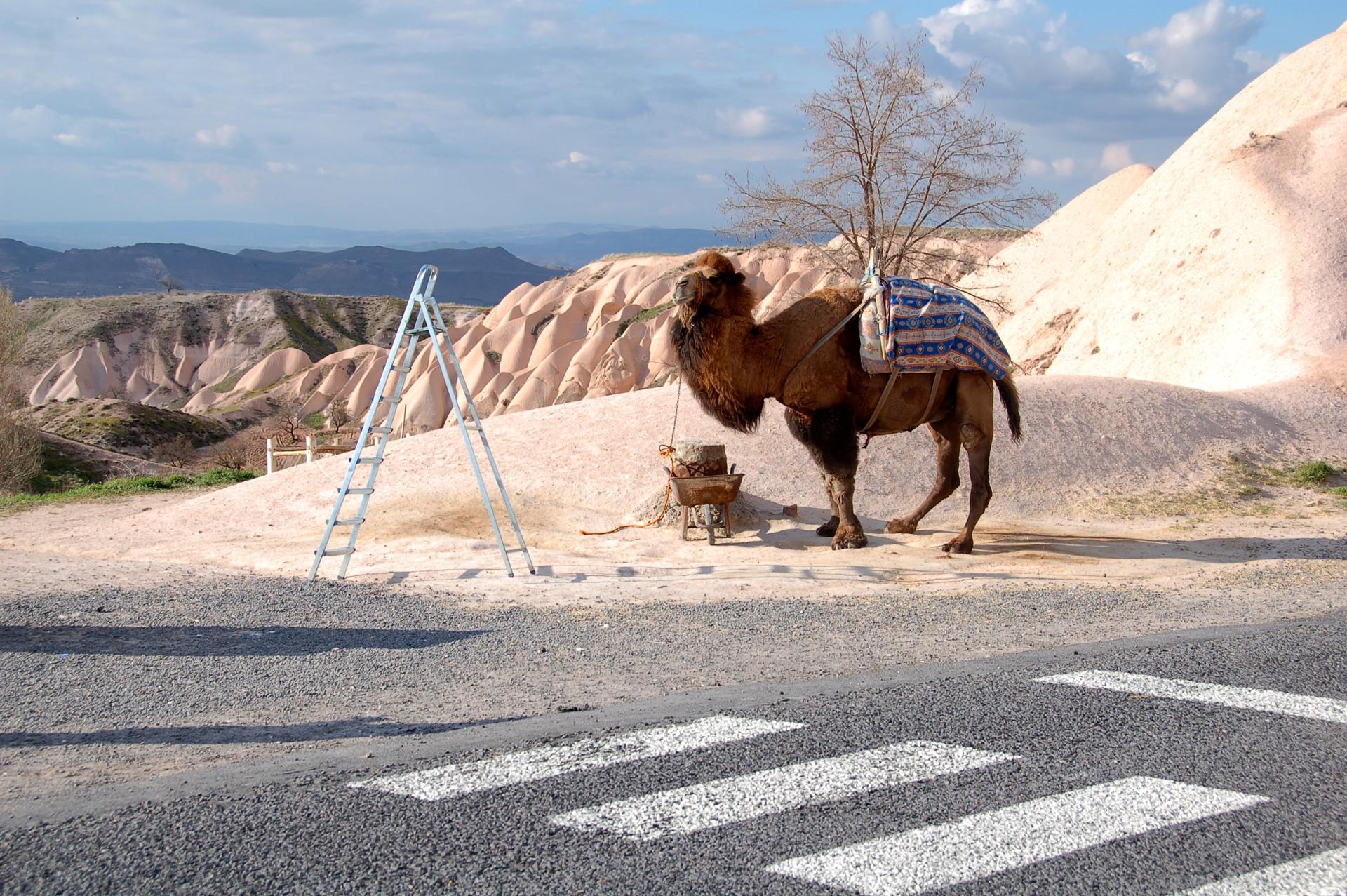 L'attente...dans les montagnes de Cappadoce