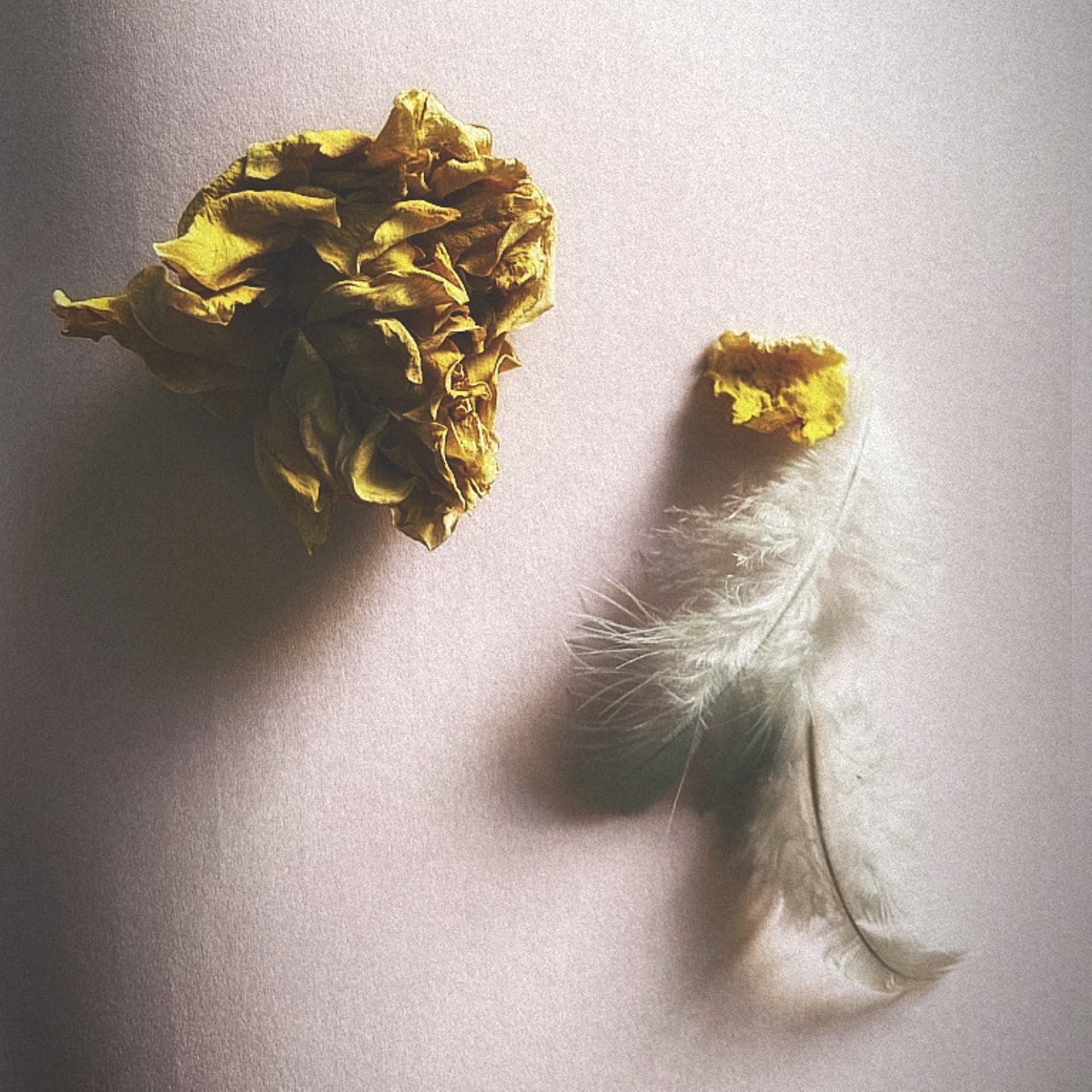 De plume et d'or