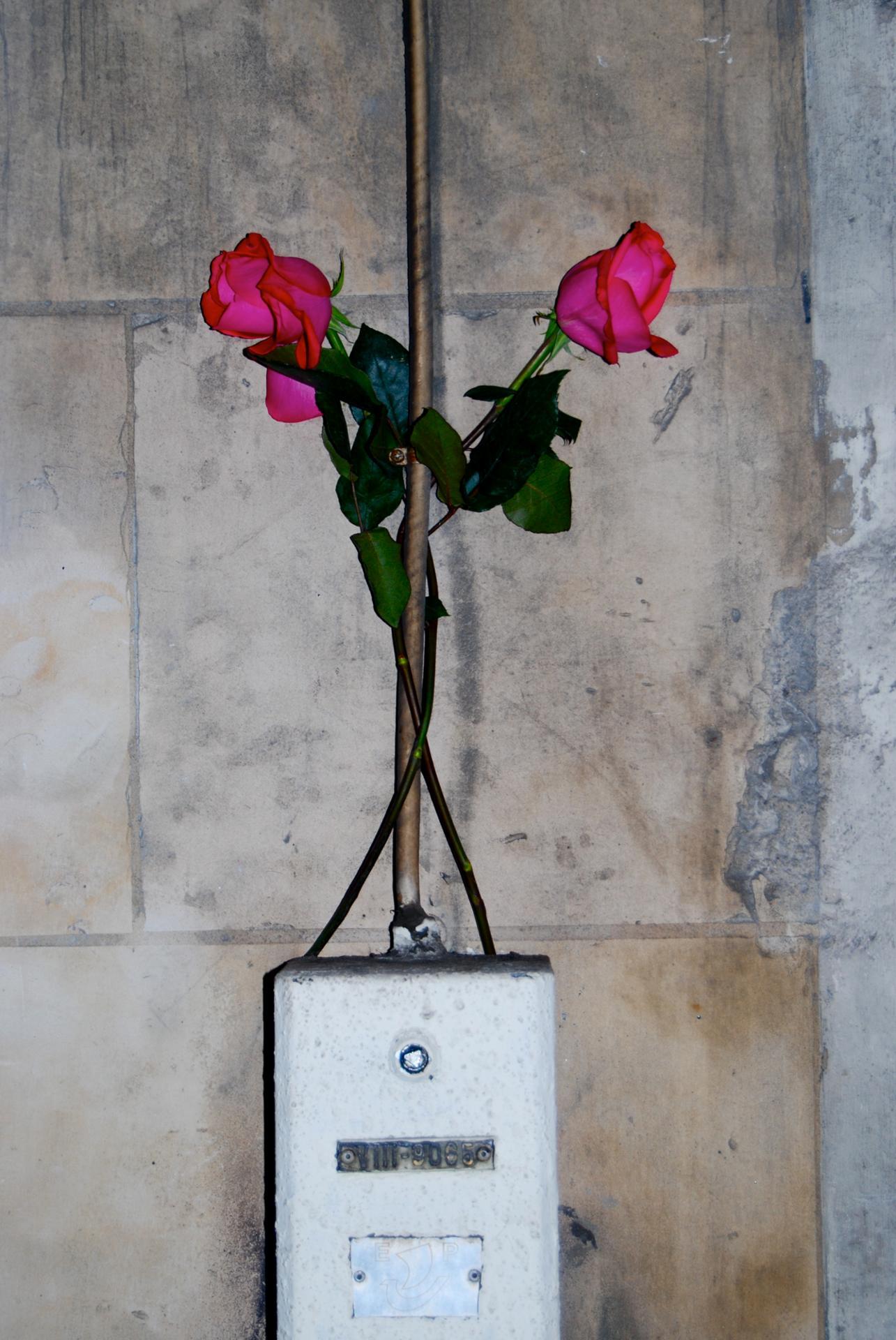 2 roses en hommage