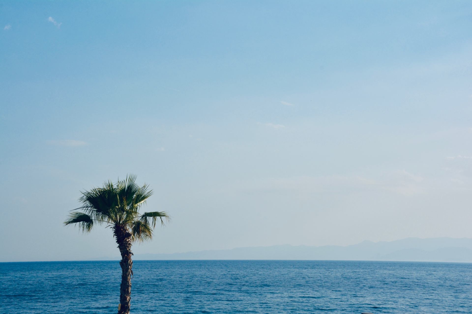 Palmier et mer -2