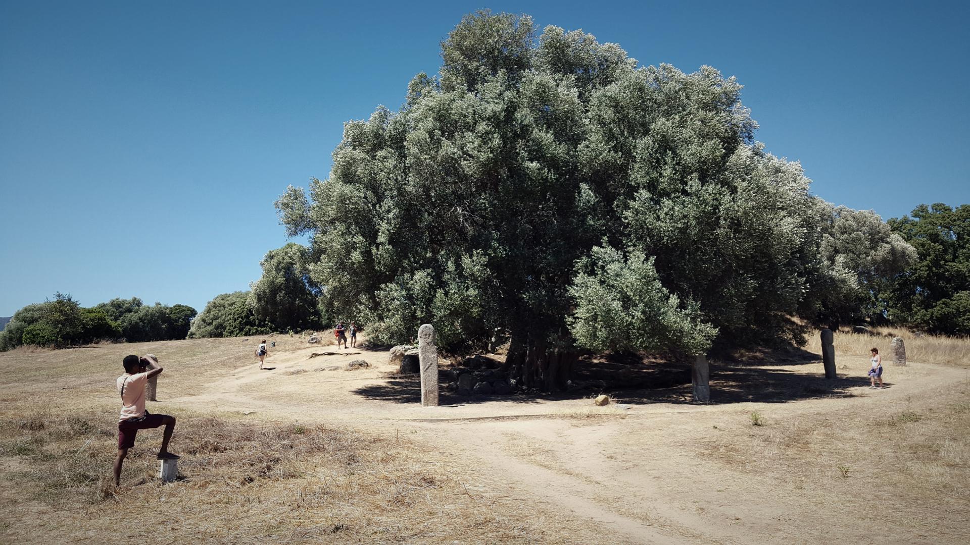 Le Photographe de l'olivier millénaire.jpg