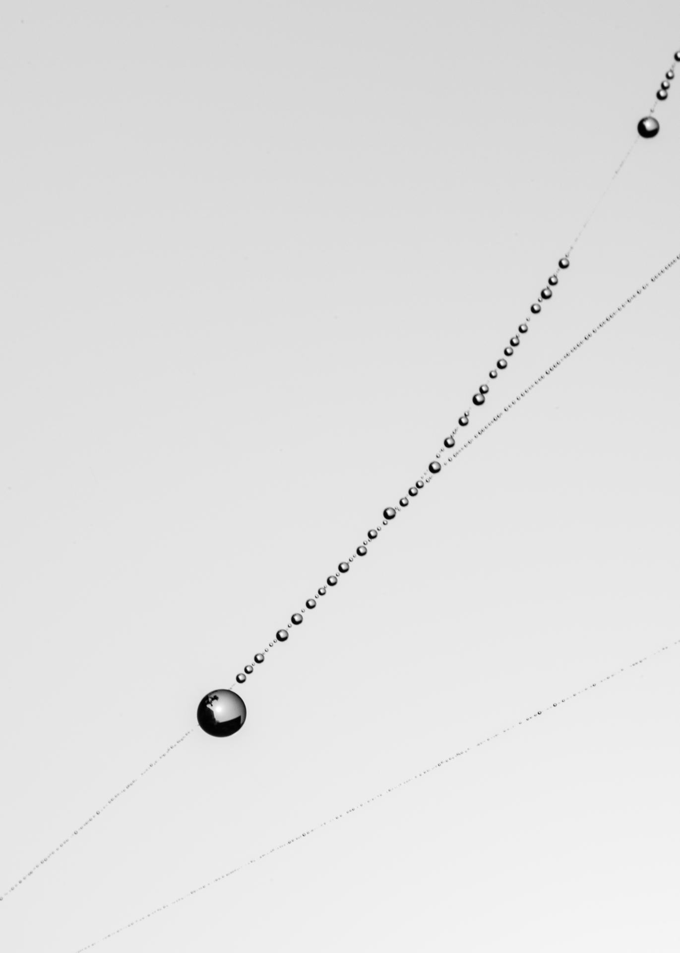 microcosme de l'araignée