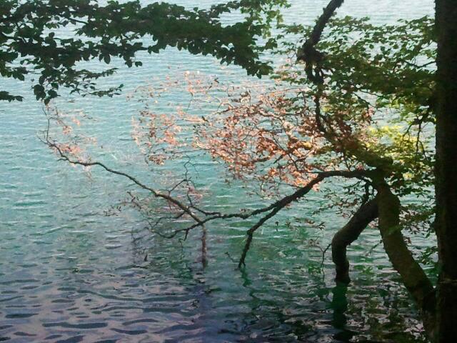 Lac Pavin baignade du géant.jpg