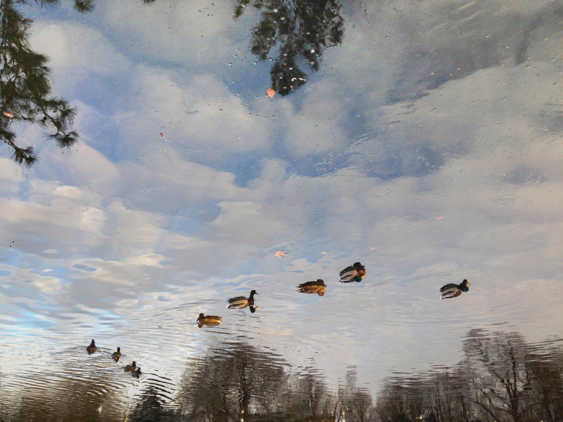 Nager dans les nuages