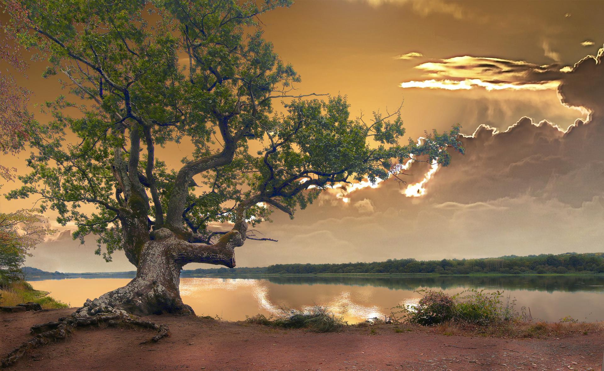 le chêne de l'étang de la Mer Rouge