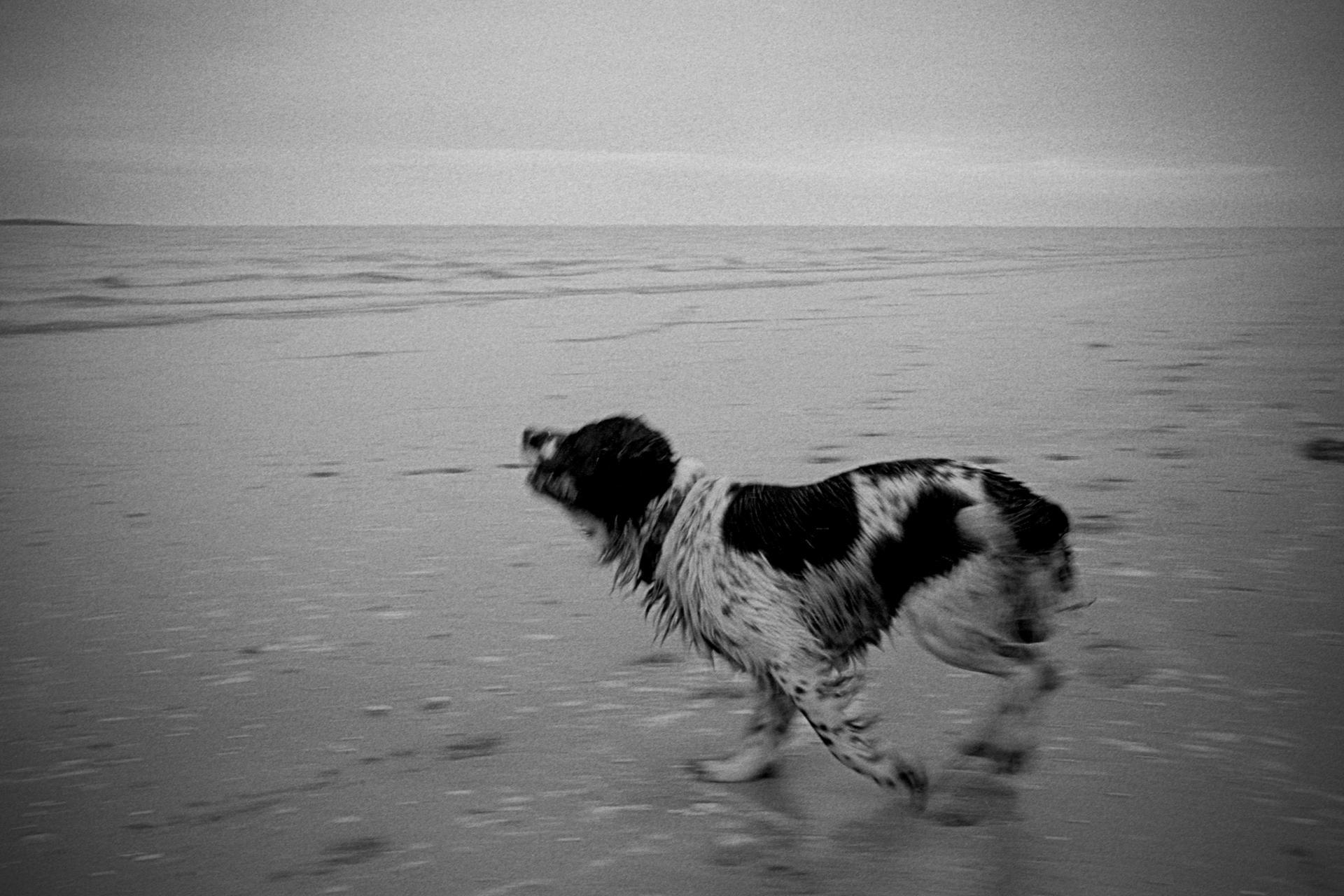 chien, plage du Crotoy