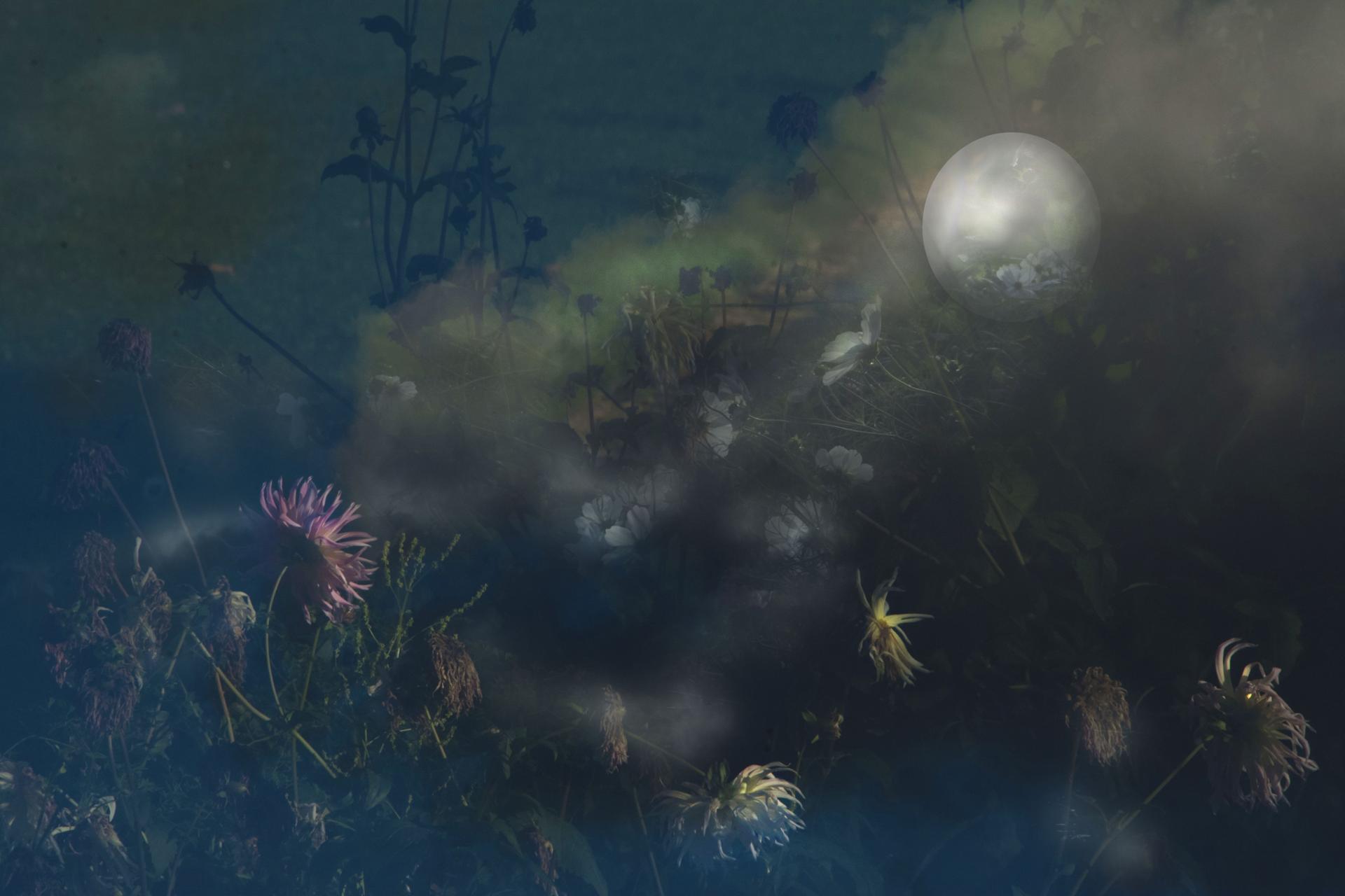 Jardin lunaire