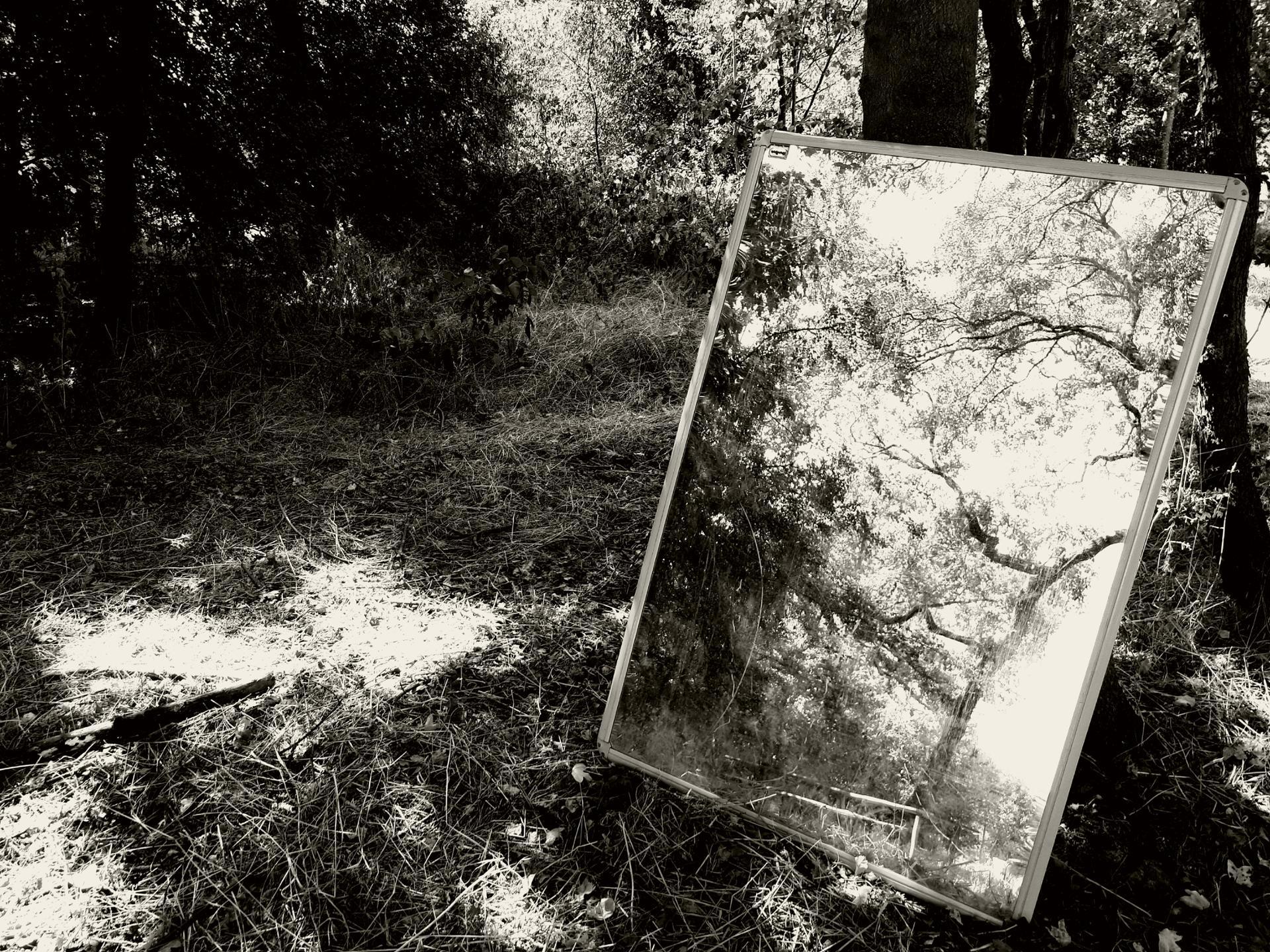 Forêt narcissique.jpg