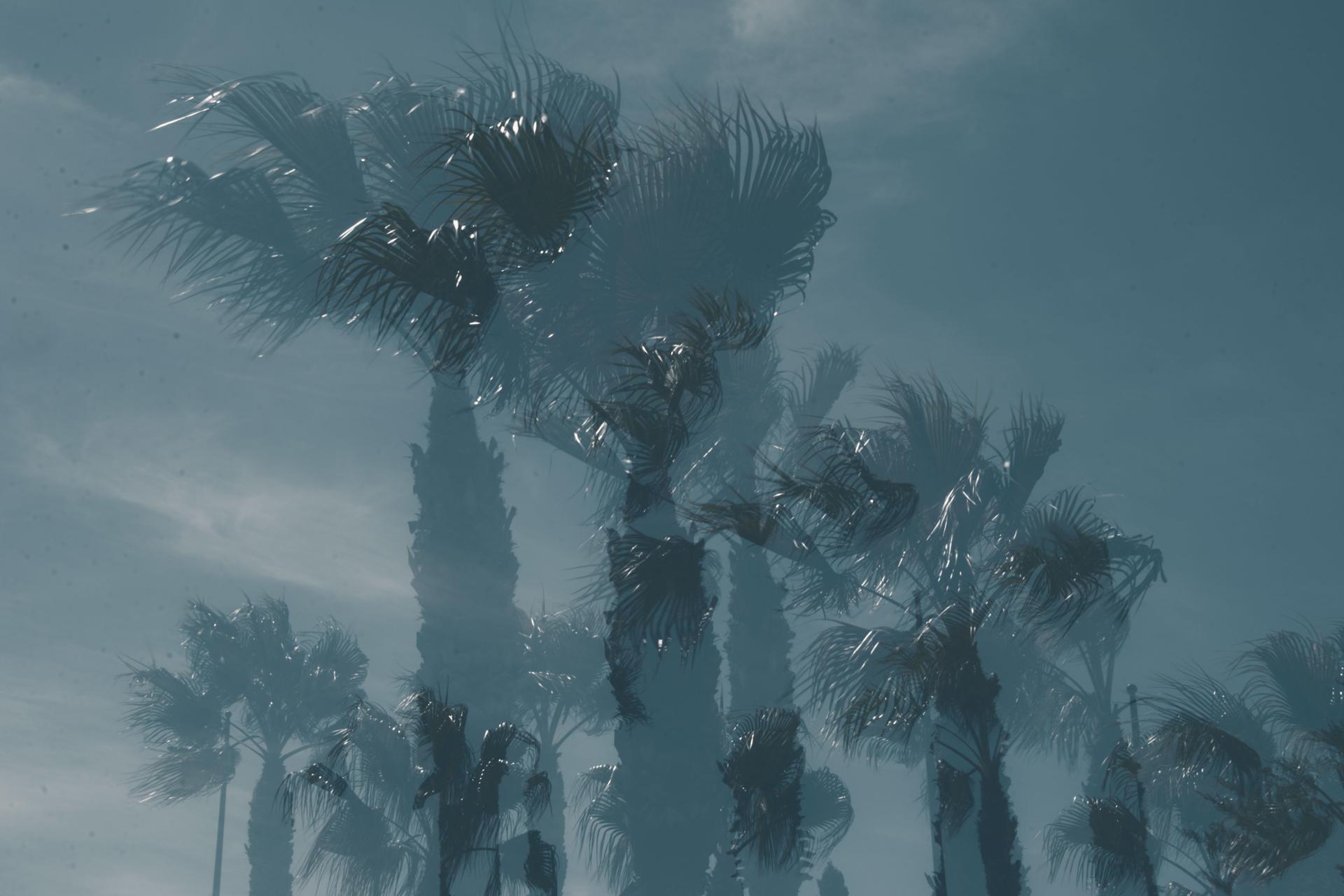 Palm boulevard.jpg