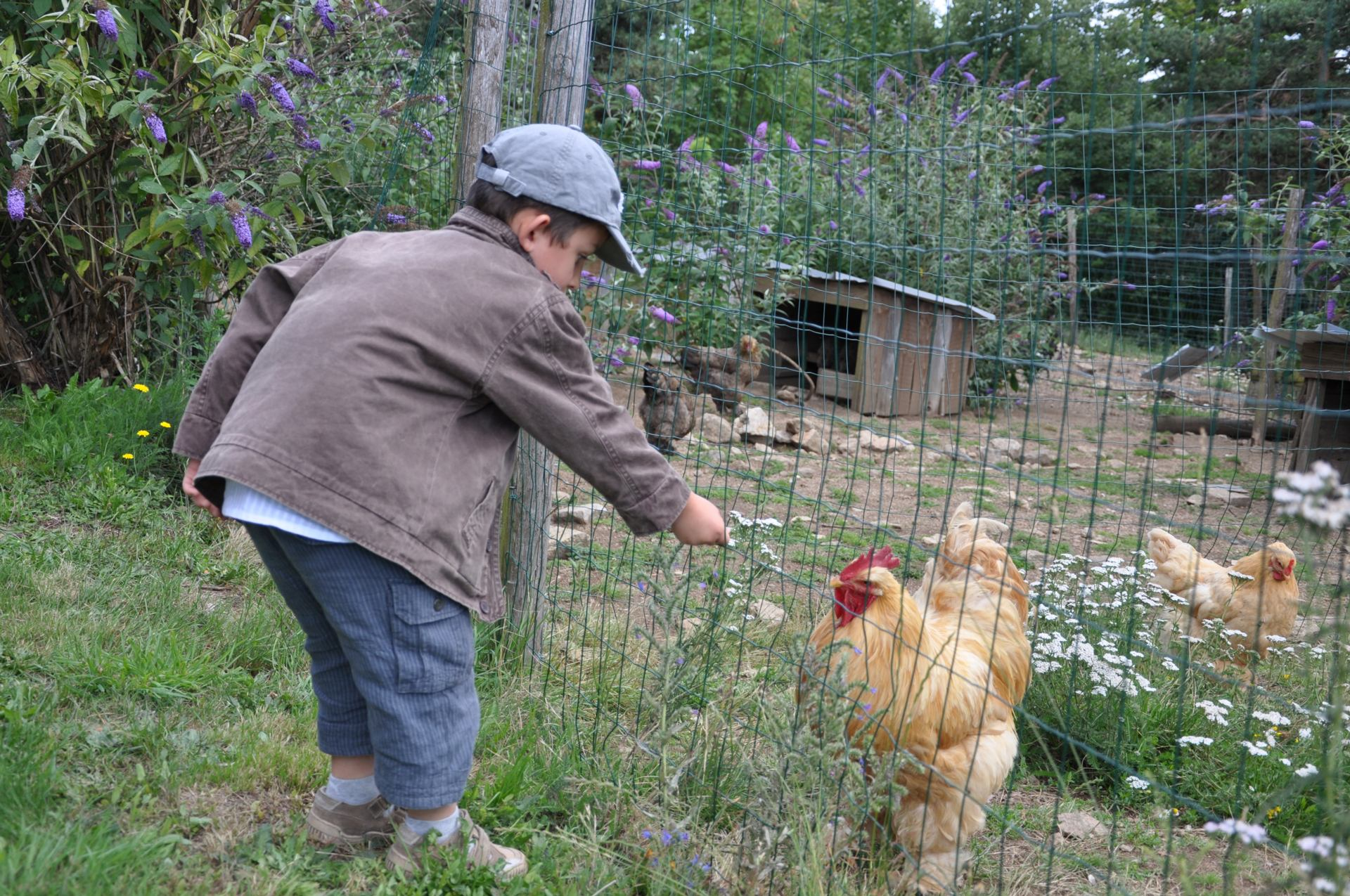 Mattéo et les poules