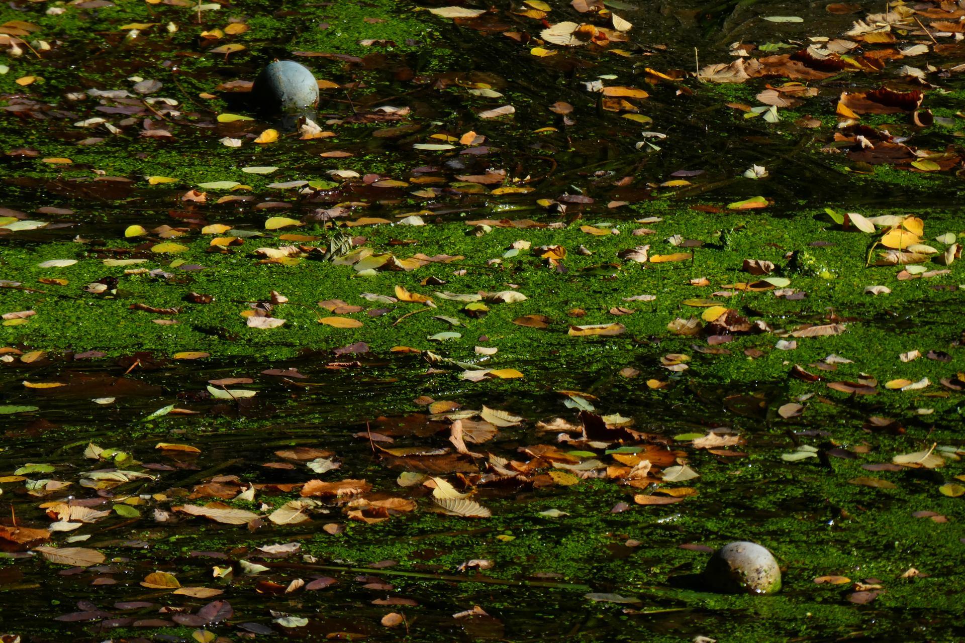 L'(e)automne